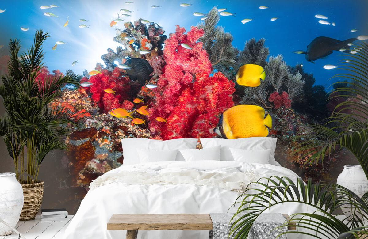 Reef life 3