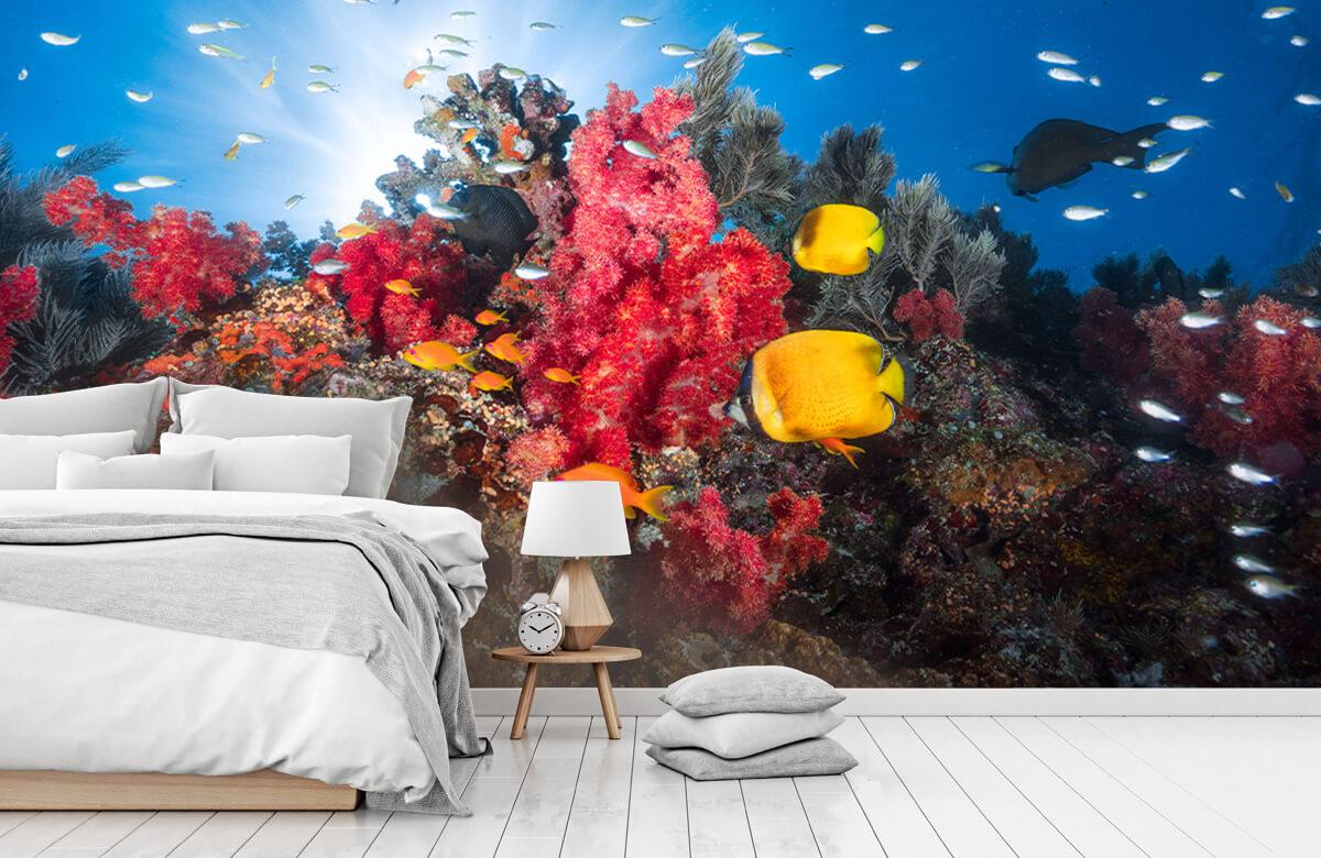 Reef life 10