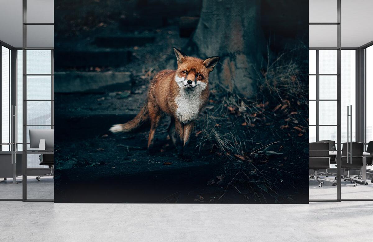 wallpaper Nieuwsgierige vos 8