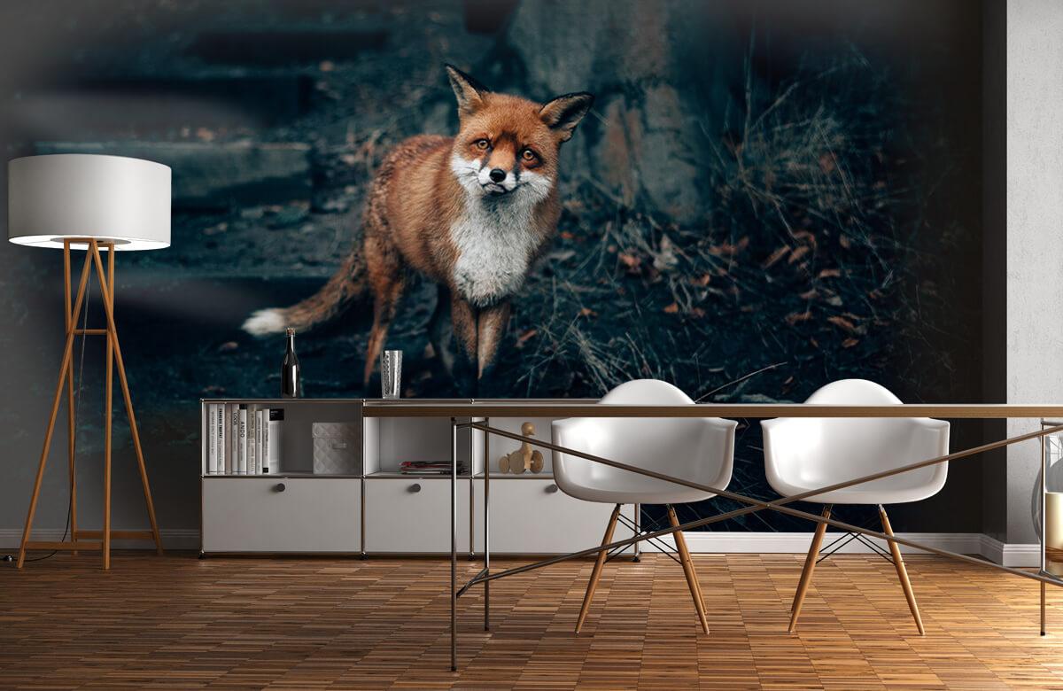 wallpaper Nieuwsgierige vos 2