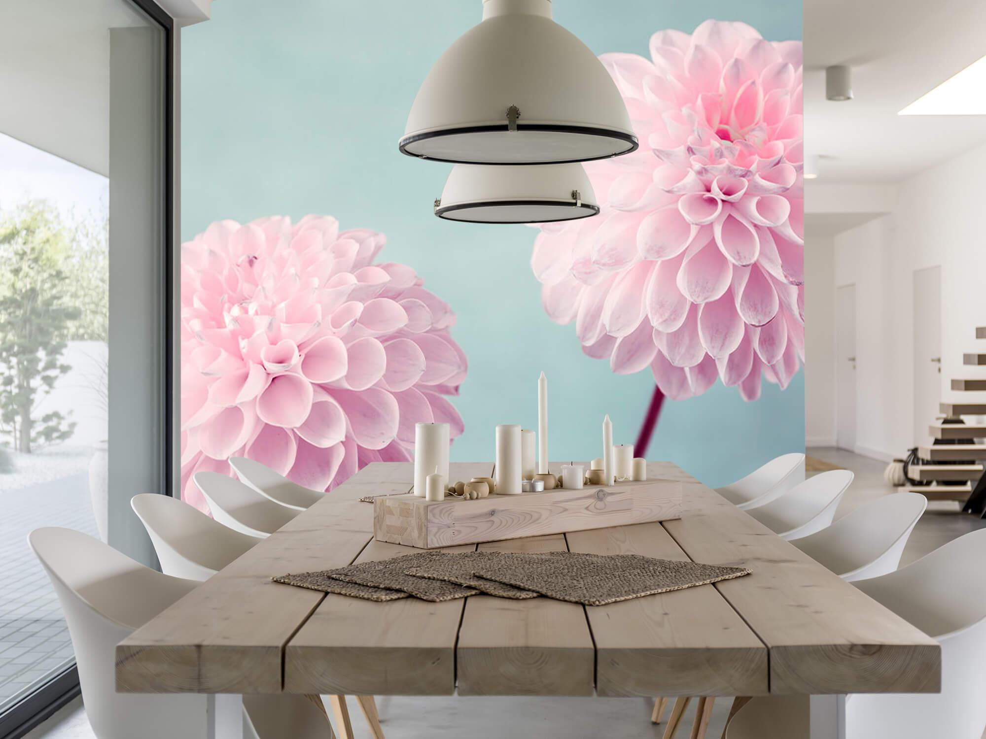 Twee Dahlia bloemen 2