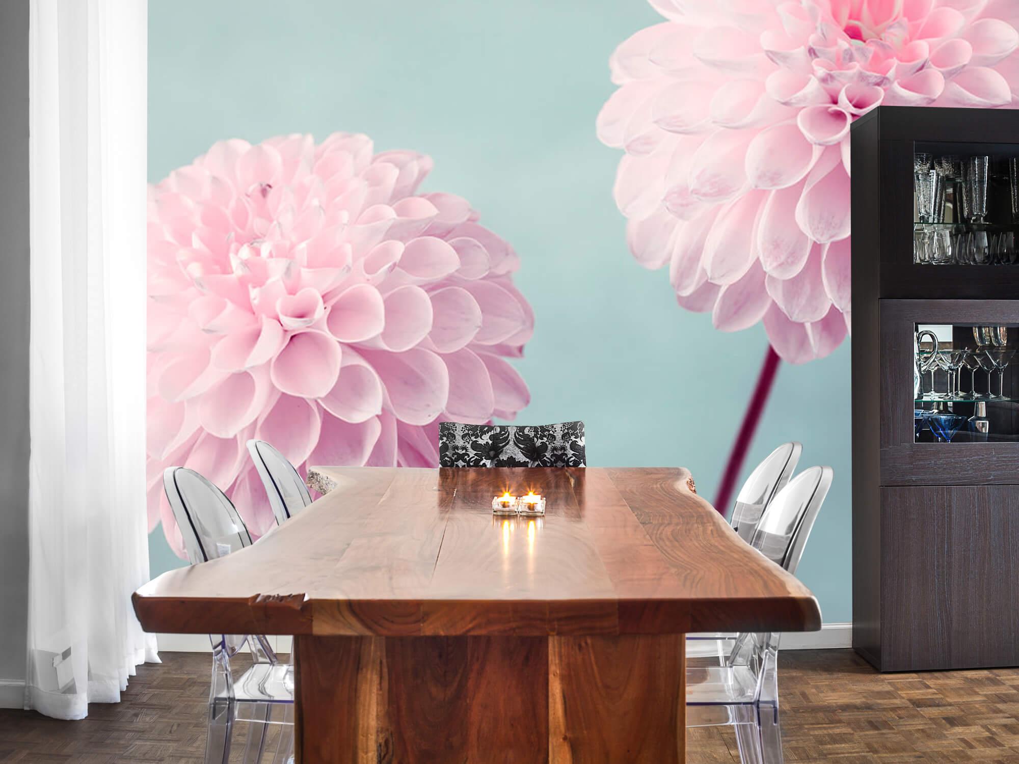 Twee Dahlia bloemen 4