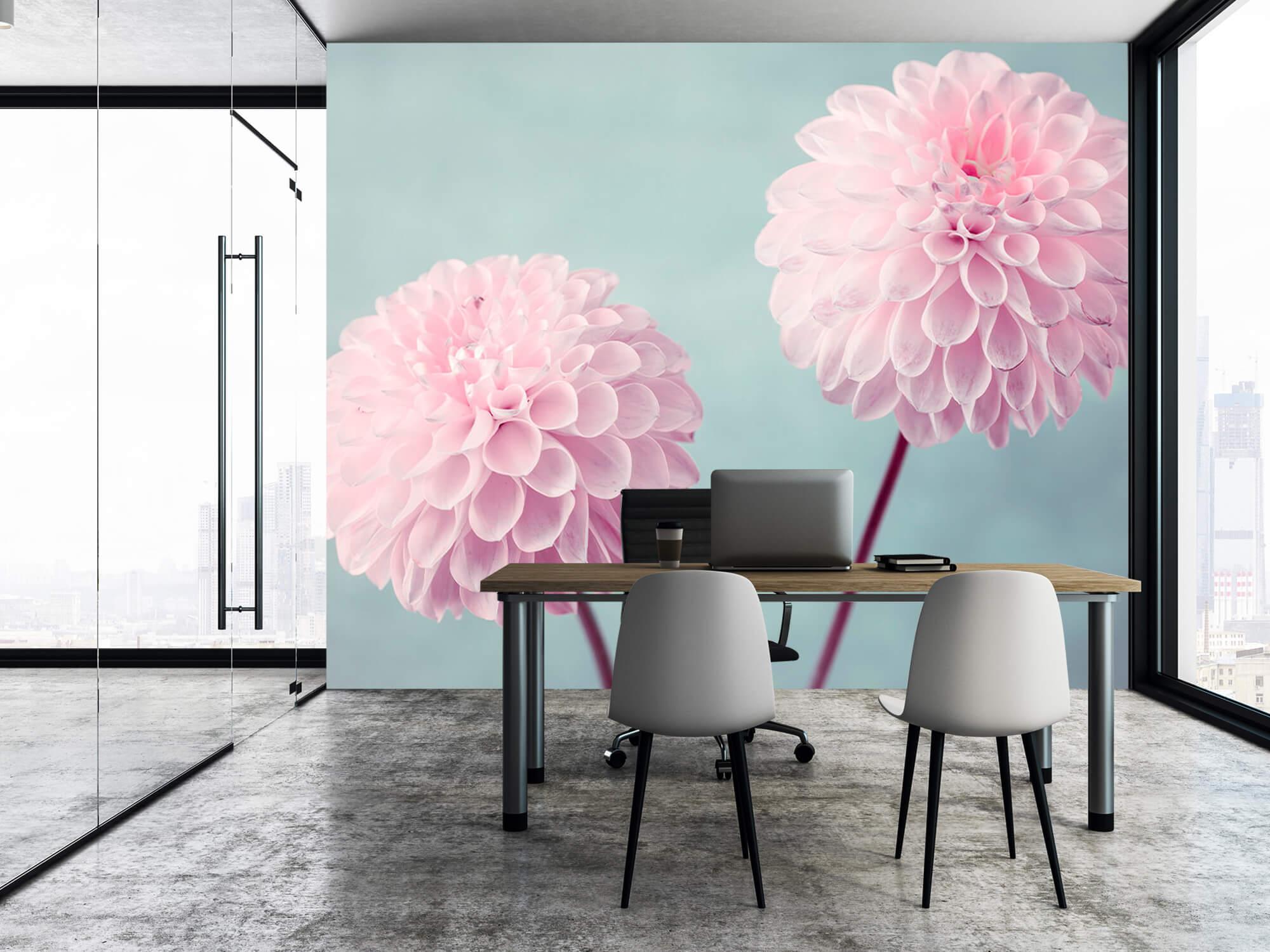 Twee Dahlia bloemen 5