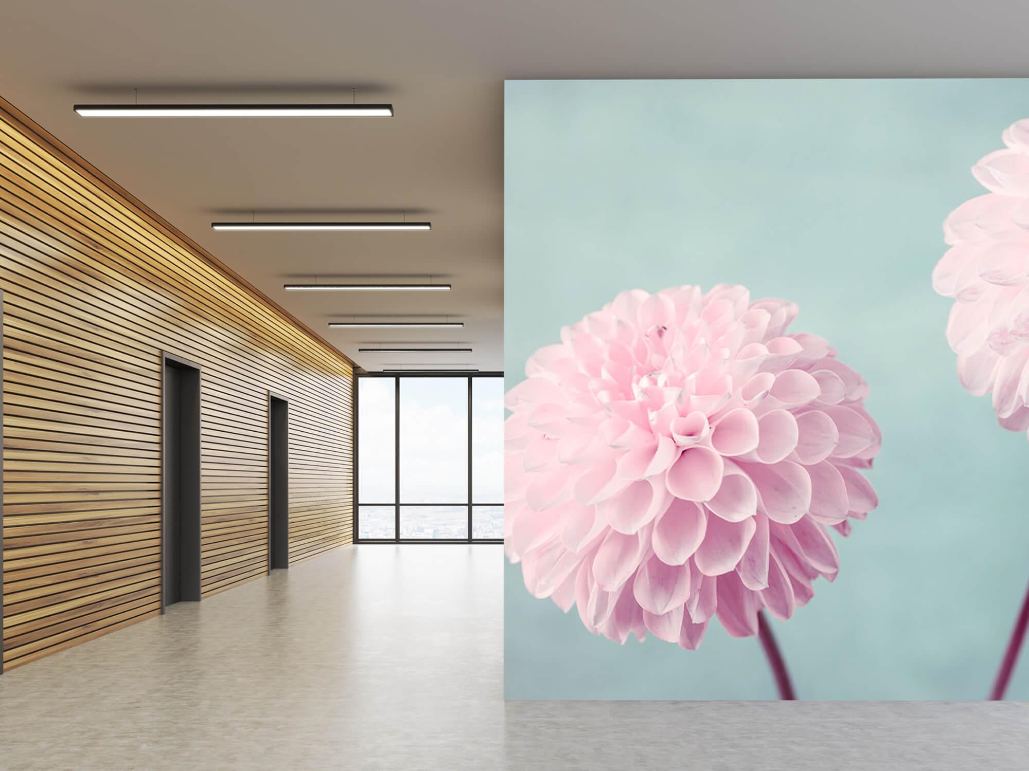 Twee Dahlia bloemen 6
