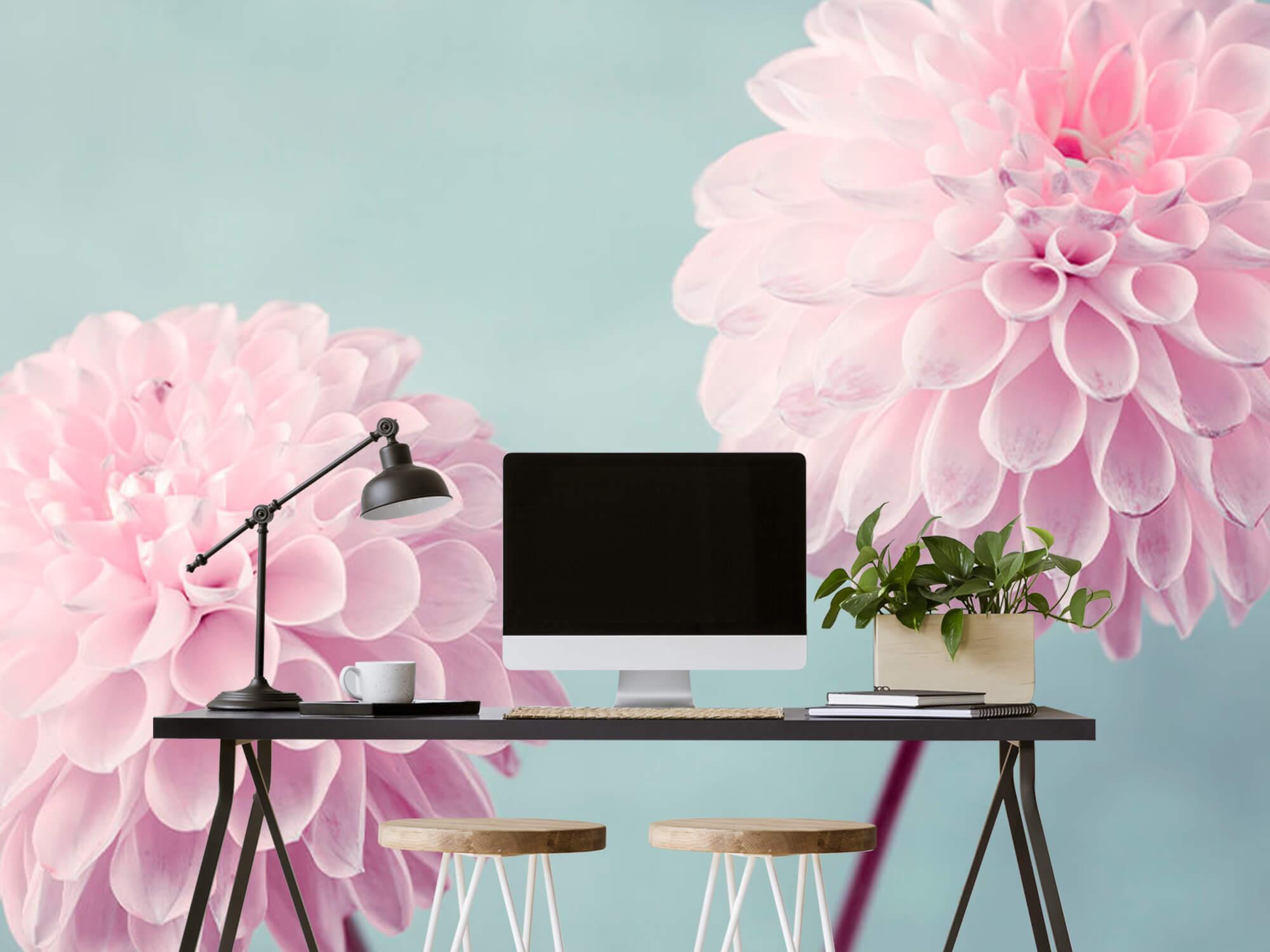 Twee Dahlia bloemen 7