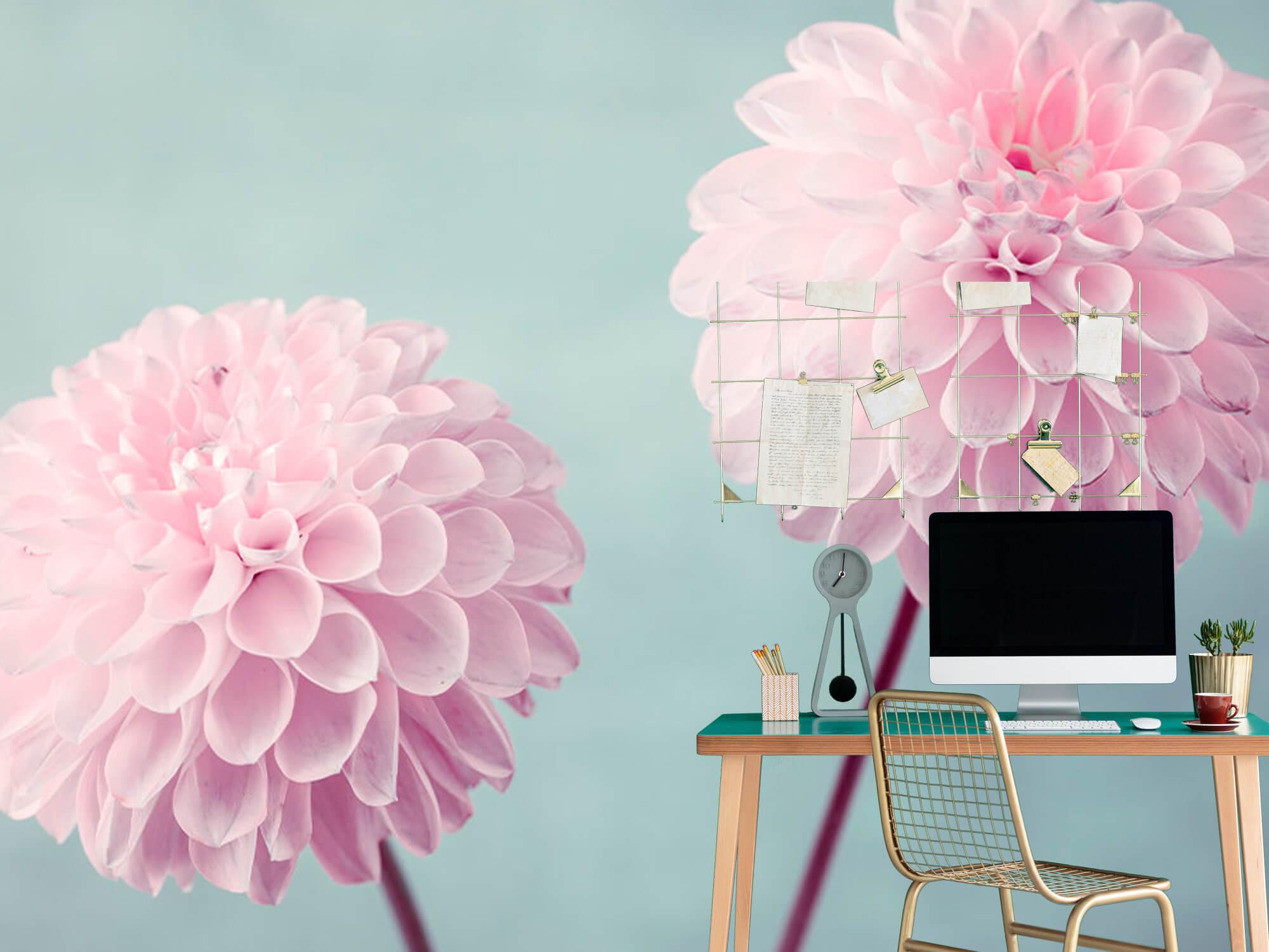 Twee Dahlia bloemen 10