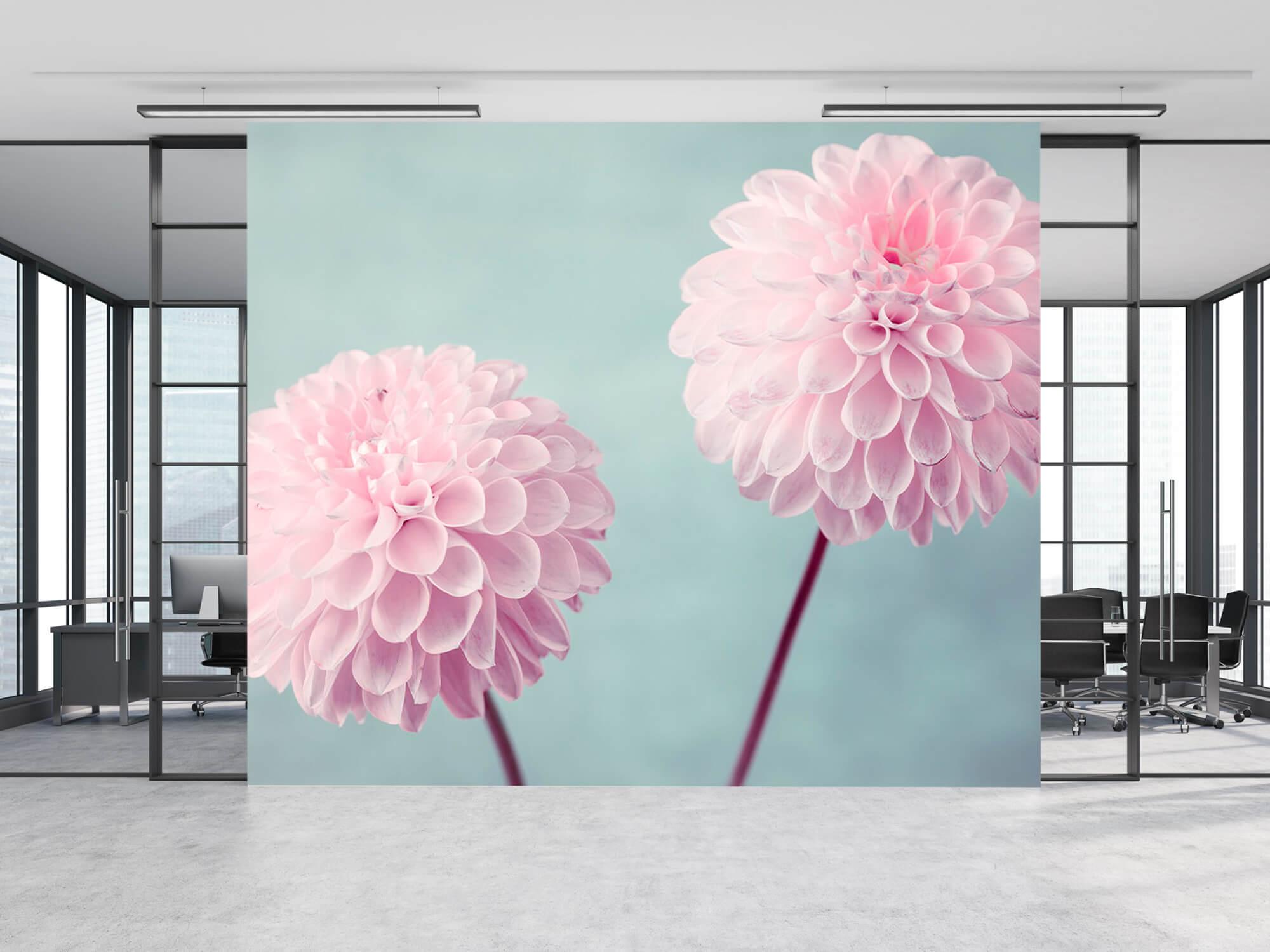 Twee Dahlia bloemen 12