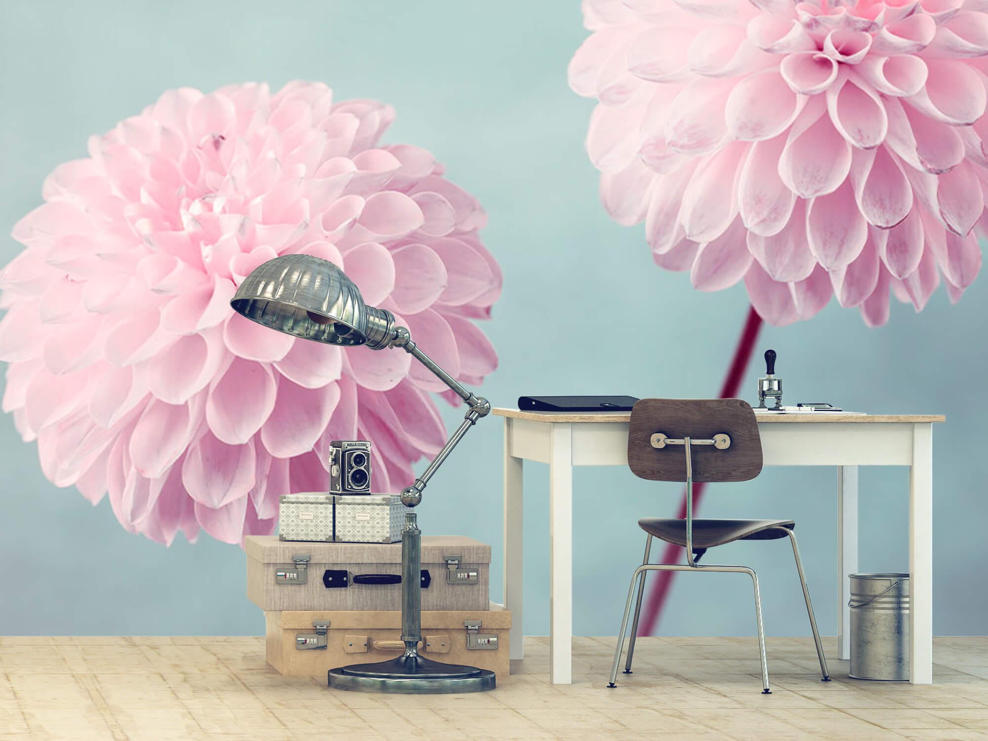 Twee Dahlia bloemen 13