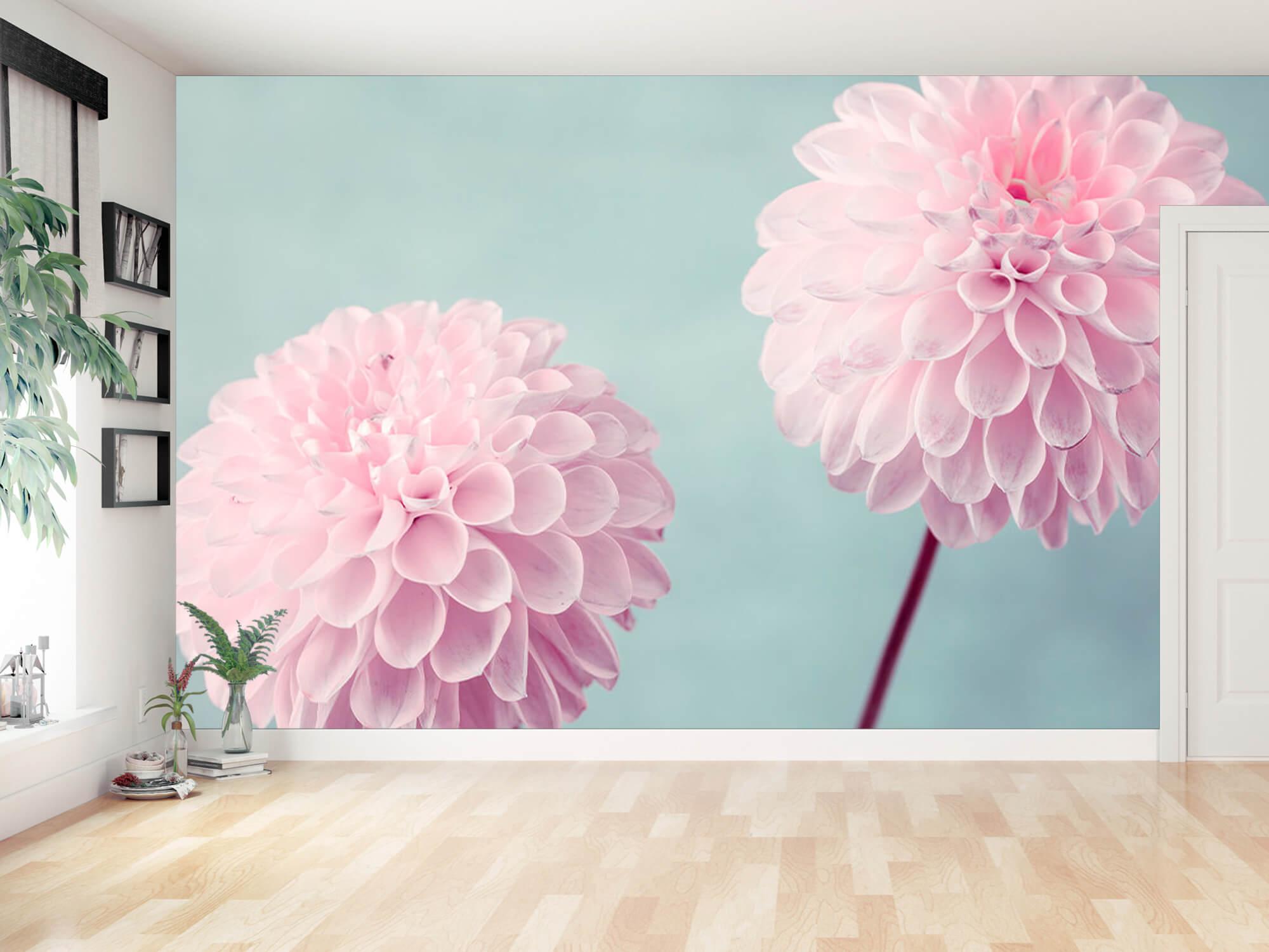 Twee Dahlia bloemen 16