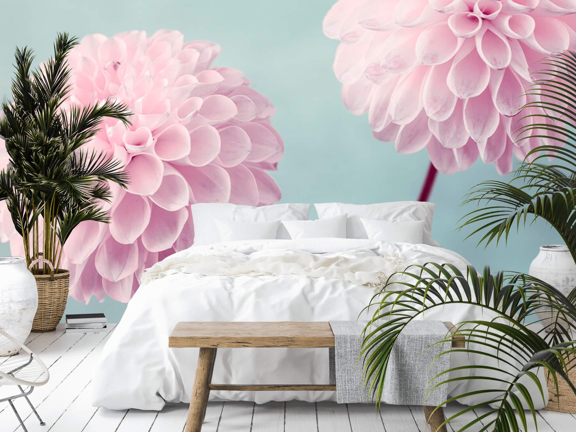 Twee Dahlia bloemen 17