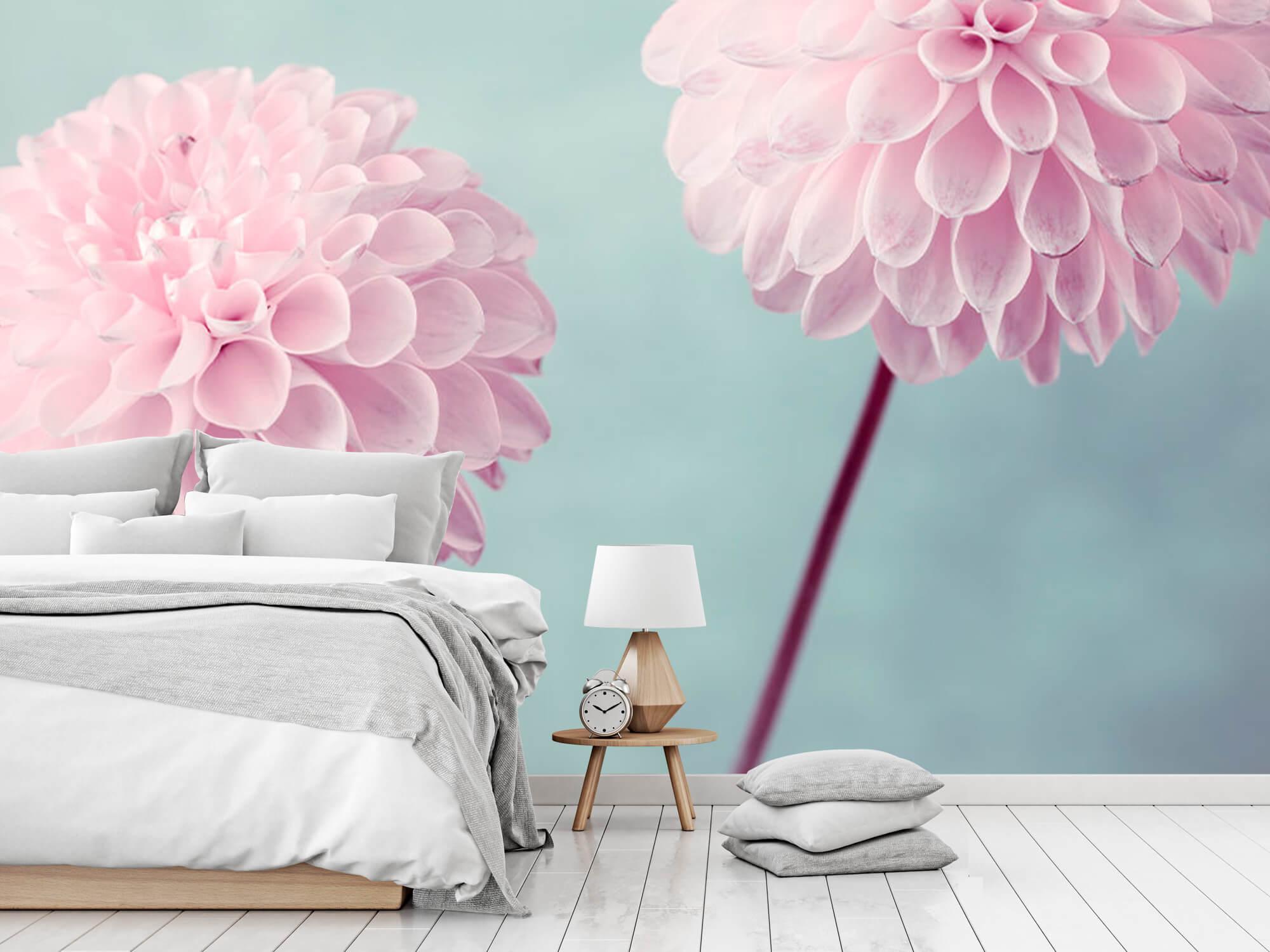 Twee Dahlia bloemen 8