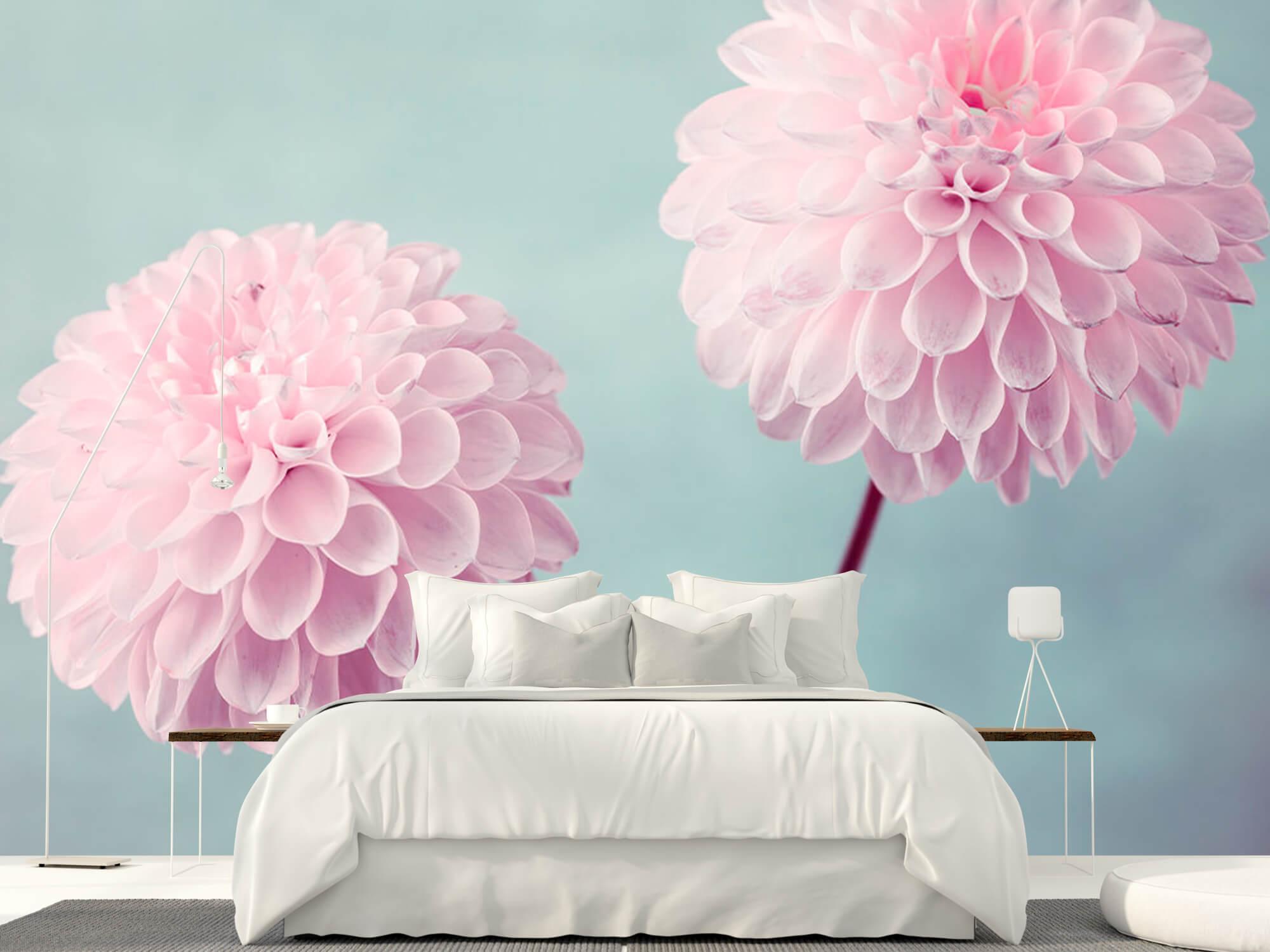 Twee Dahlia bloemen 11