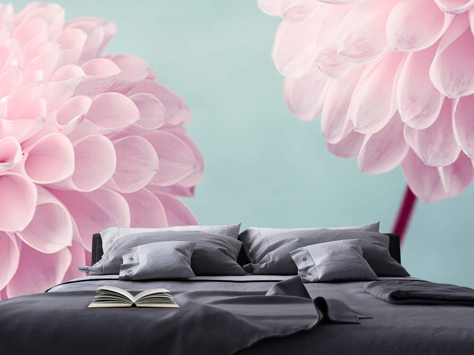 Twee Dahlia bloemen 14