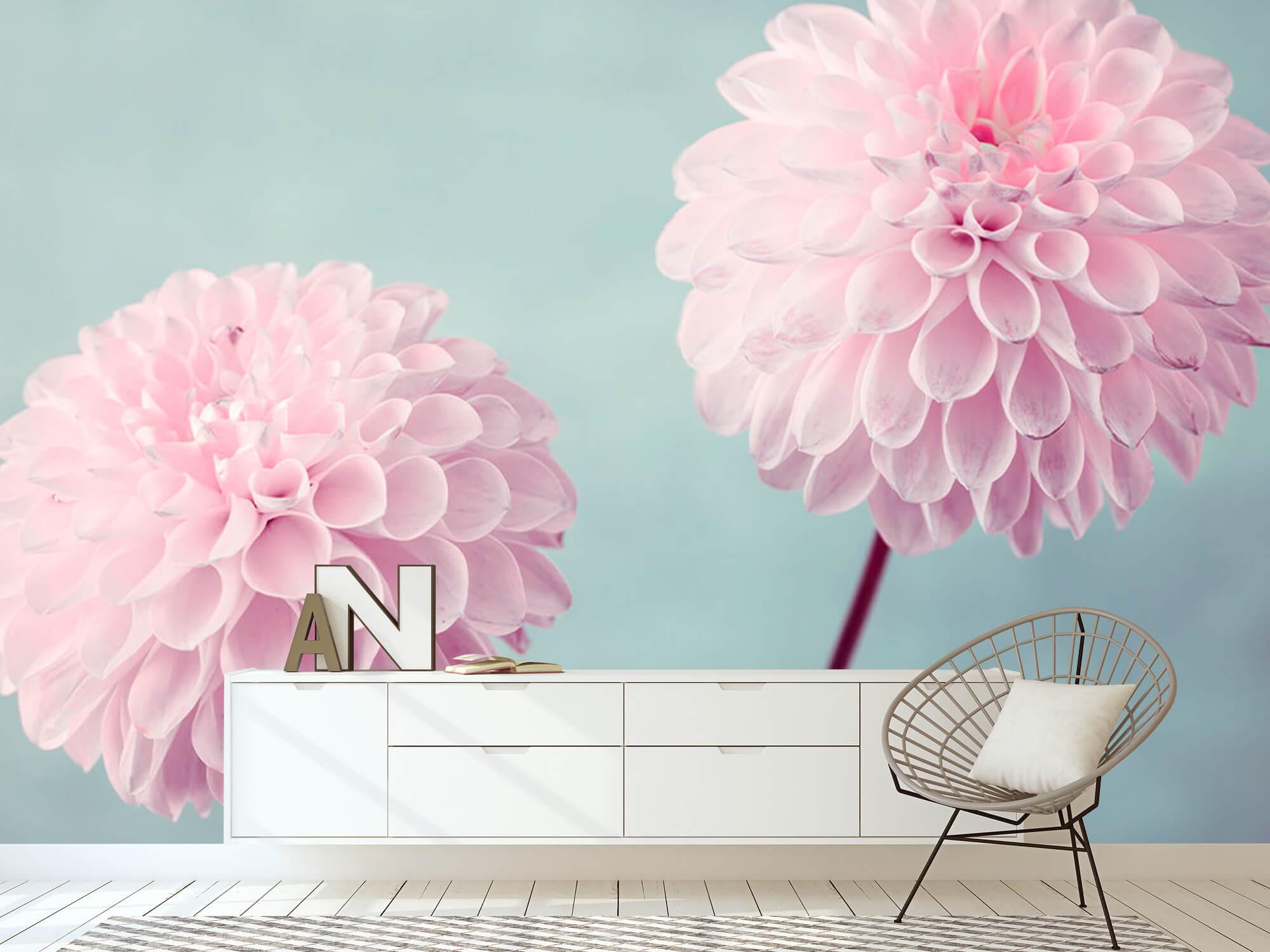 Twee Dahlia bloemen 9