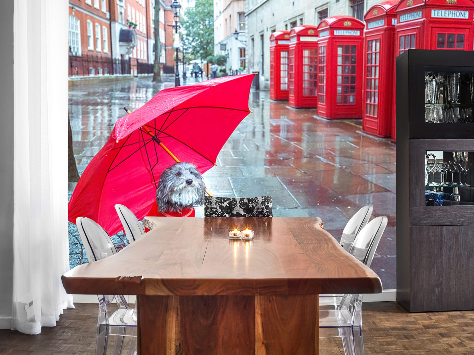 Hond met paraplu 4
