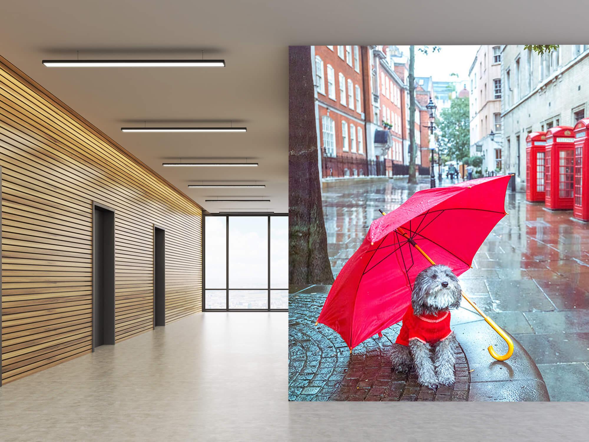 Hond met paraplu 6