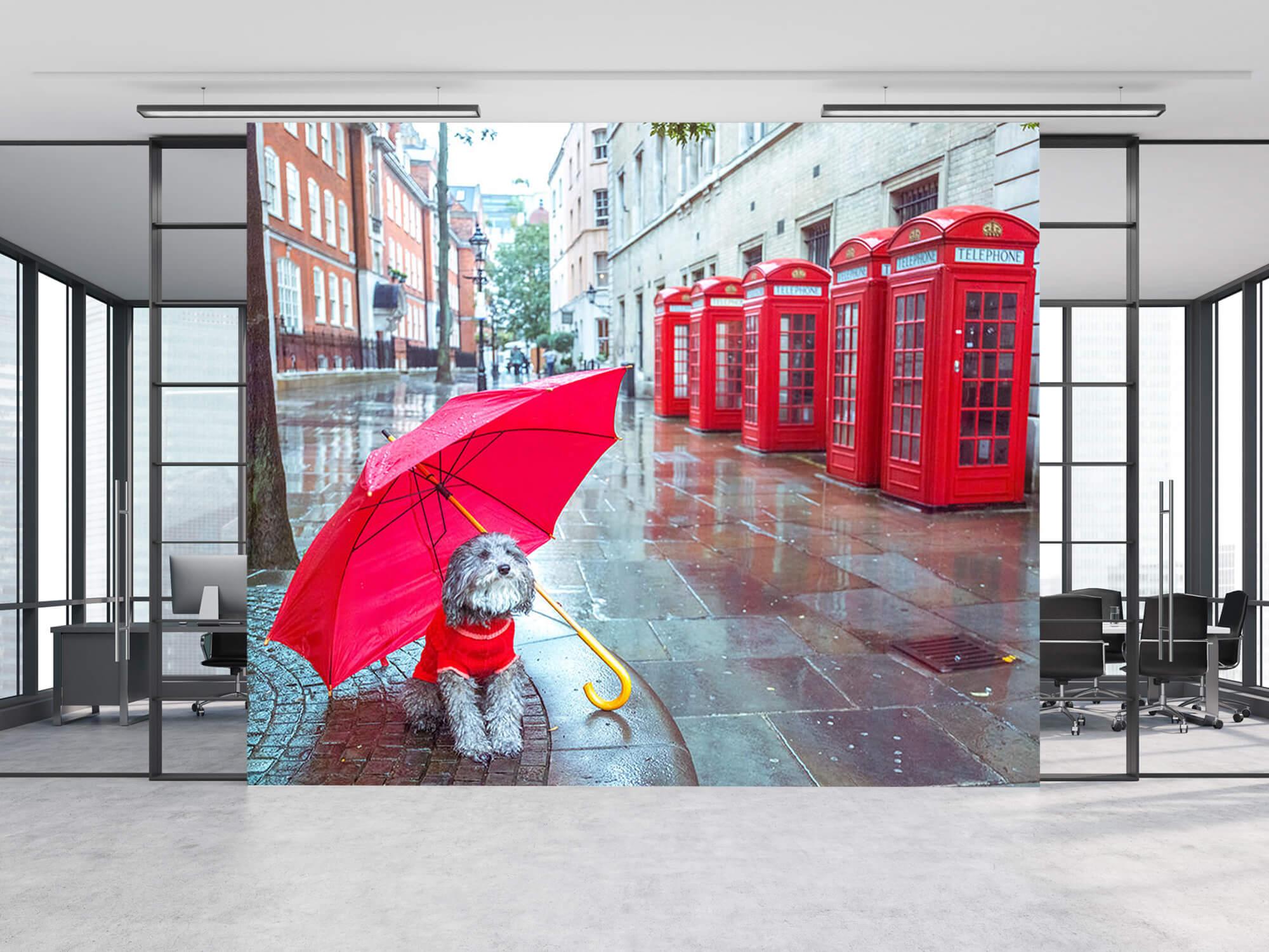 Hond met paraplu 2
