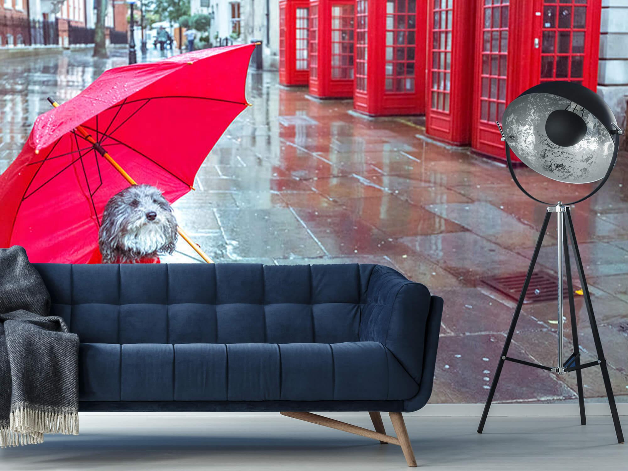 Hond met paraplu 9