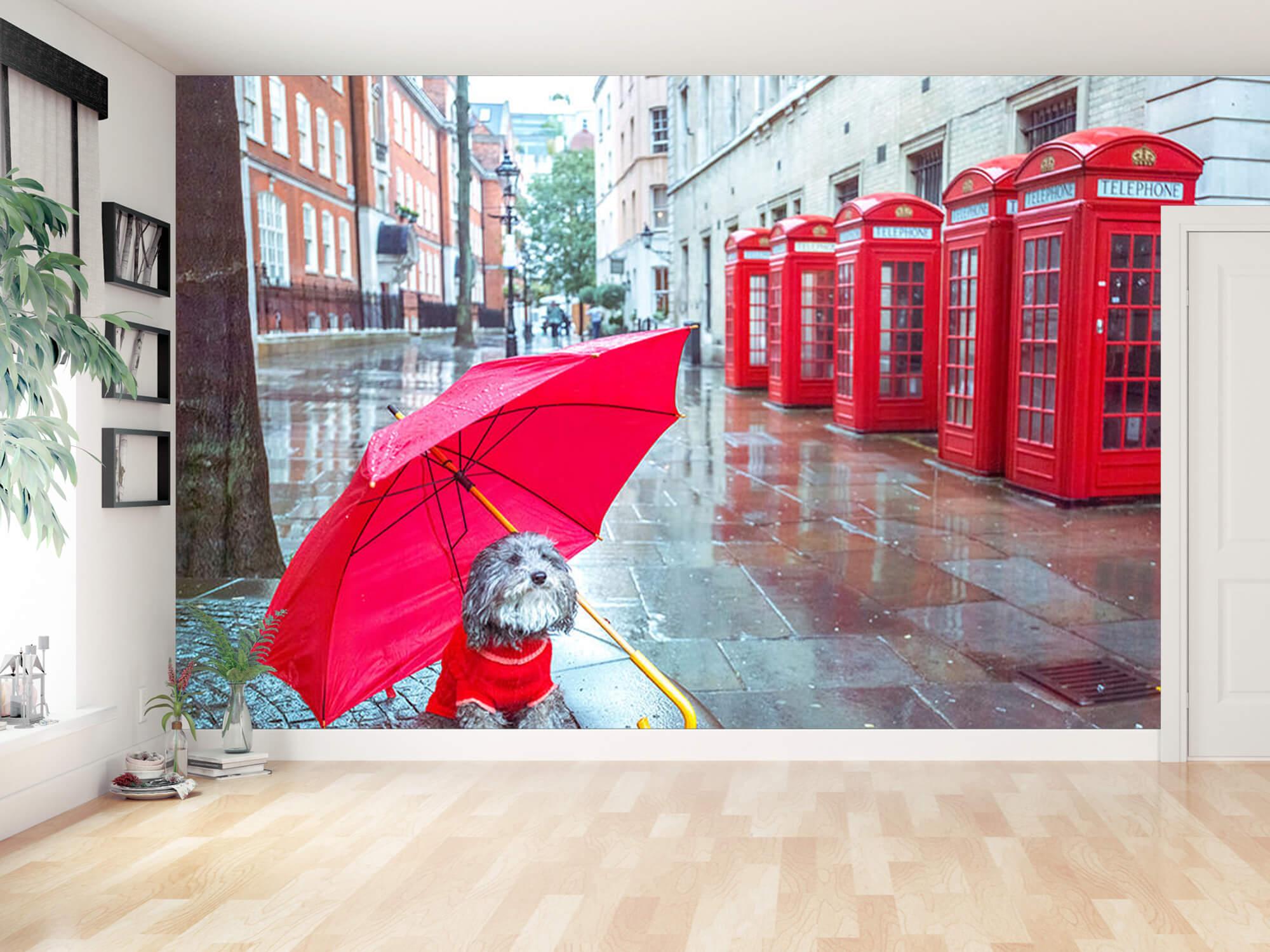 Hond met paraplu 10