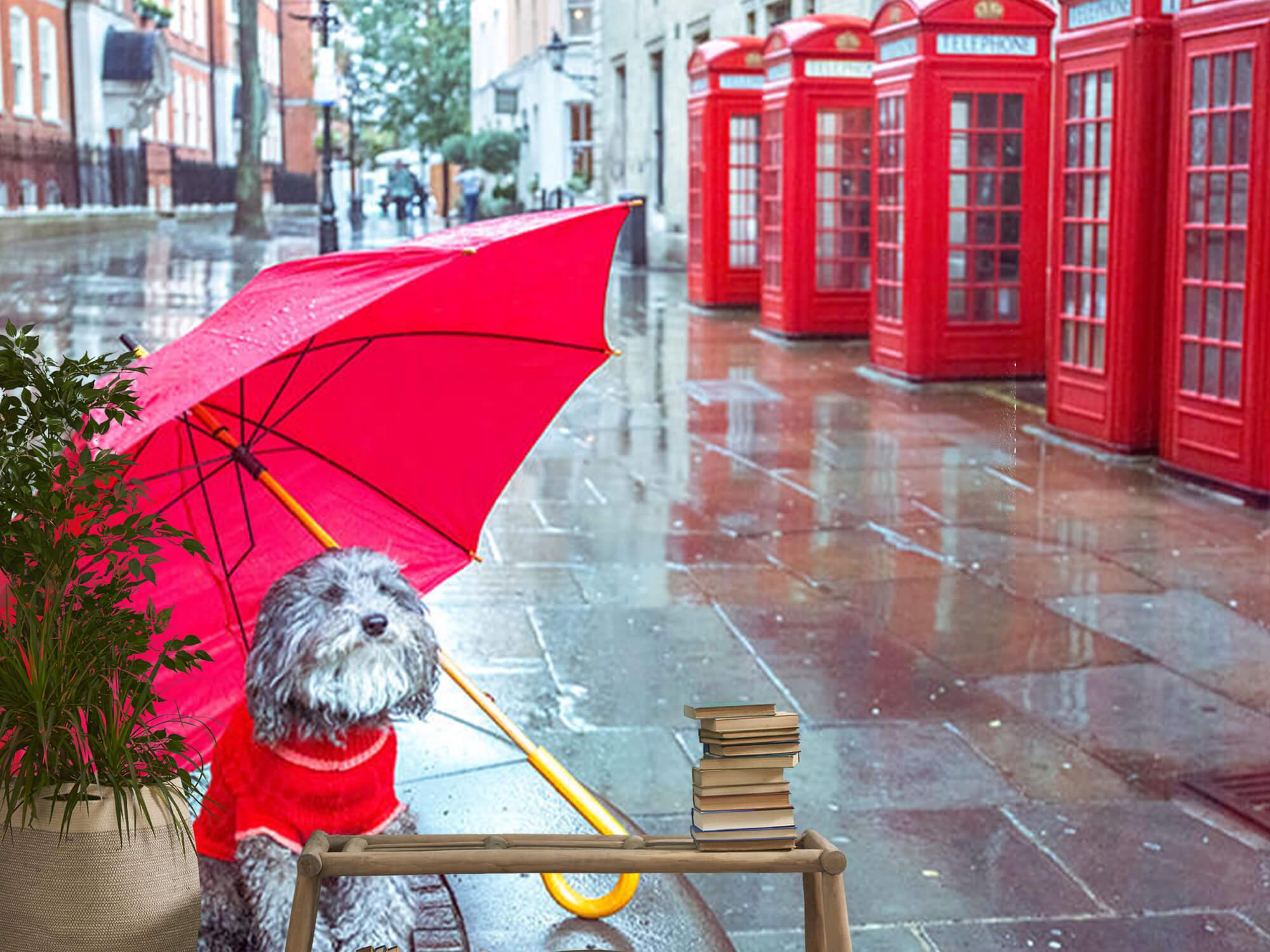 Hond met paraplu 14