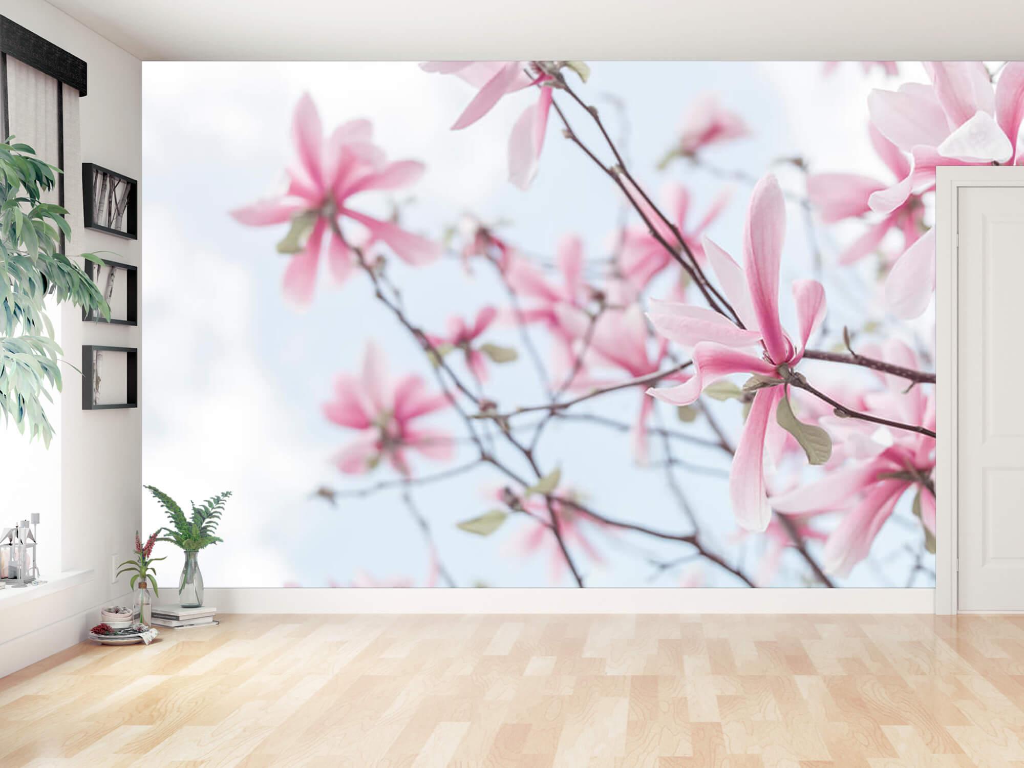 Magnolia 12