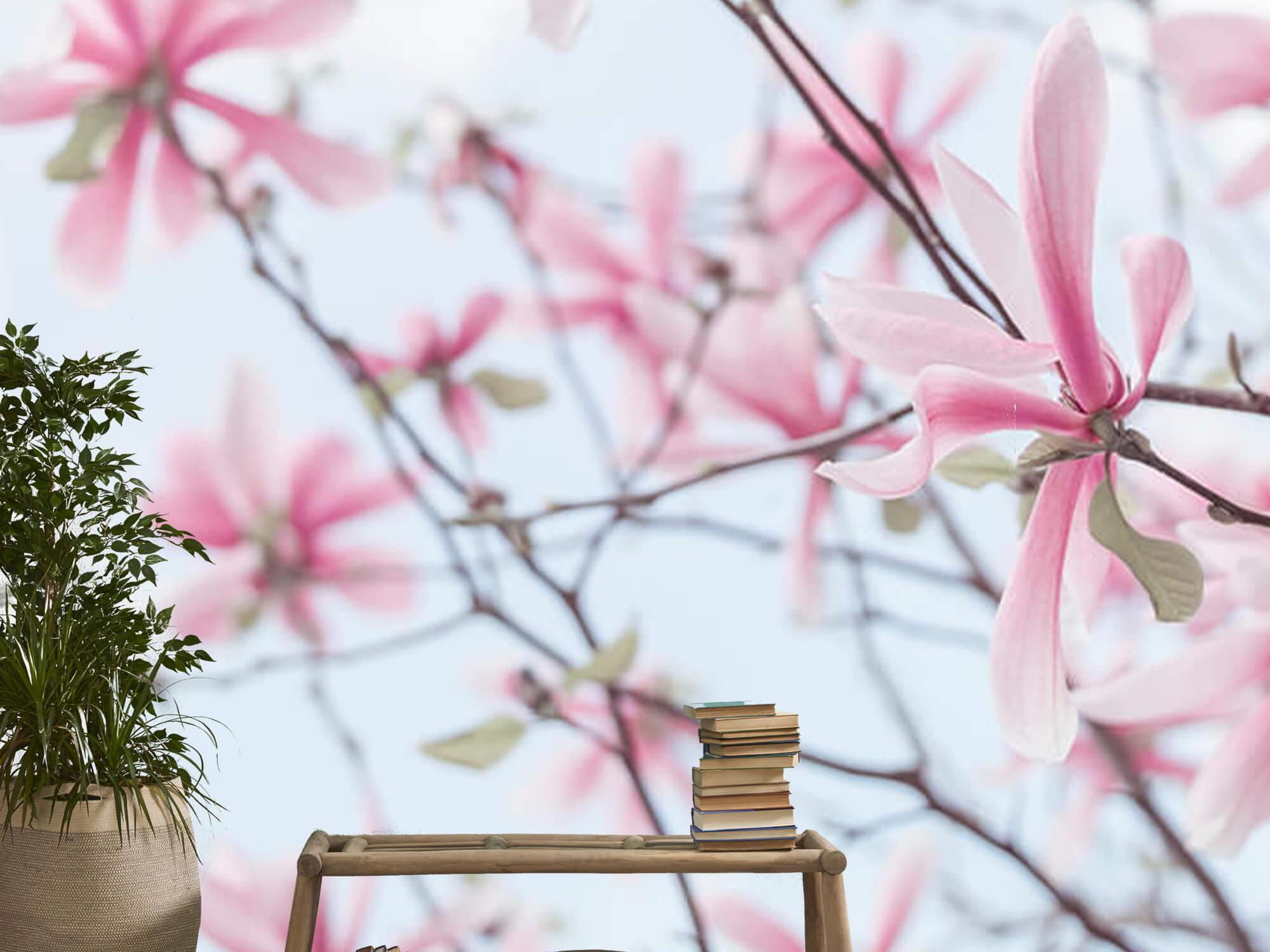 Magnolia 14