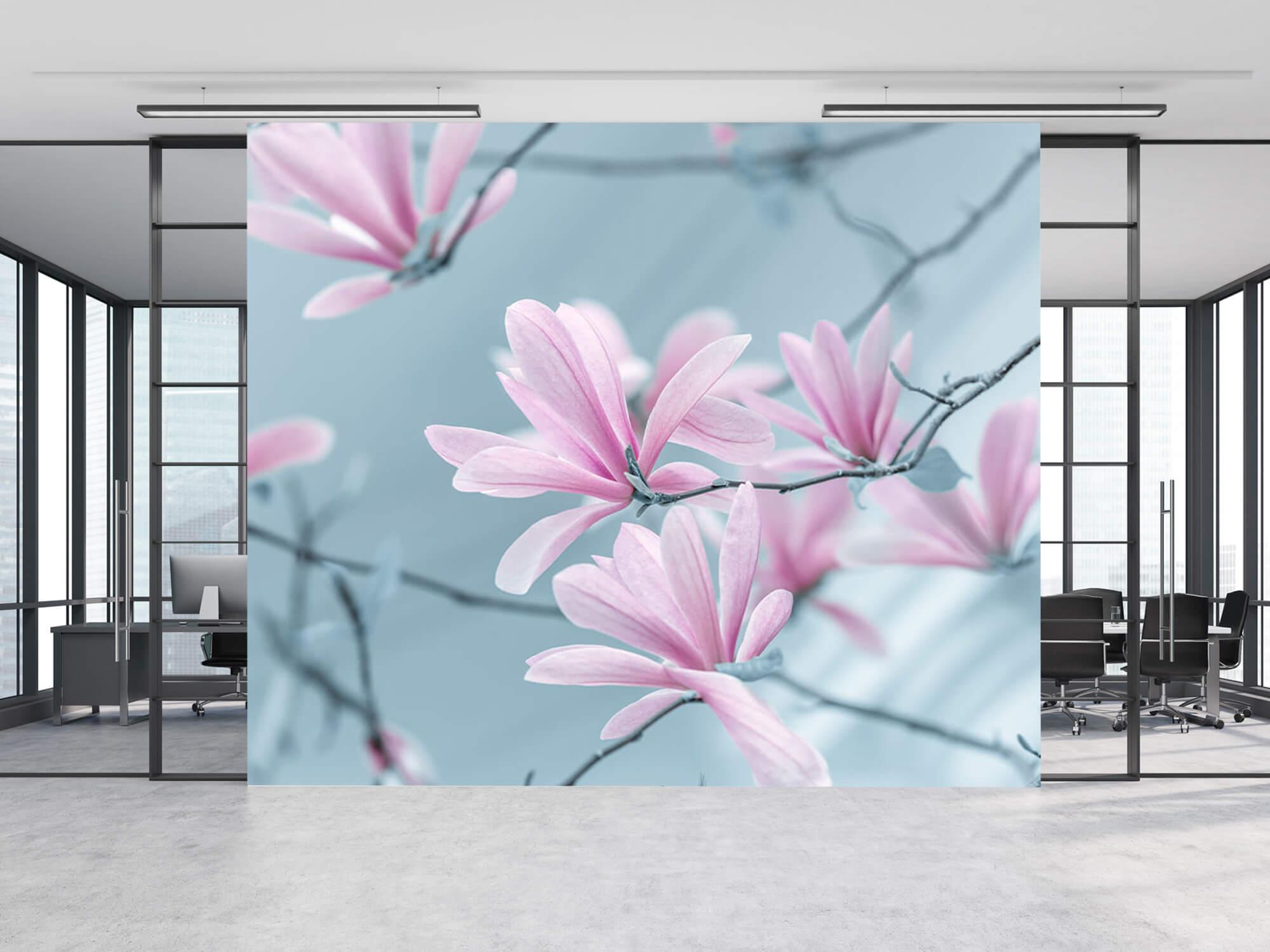 Magnolia bloemen 5