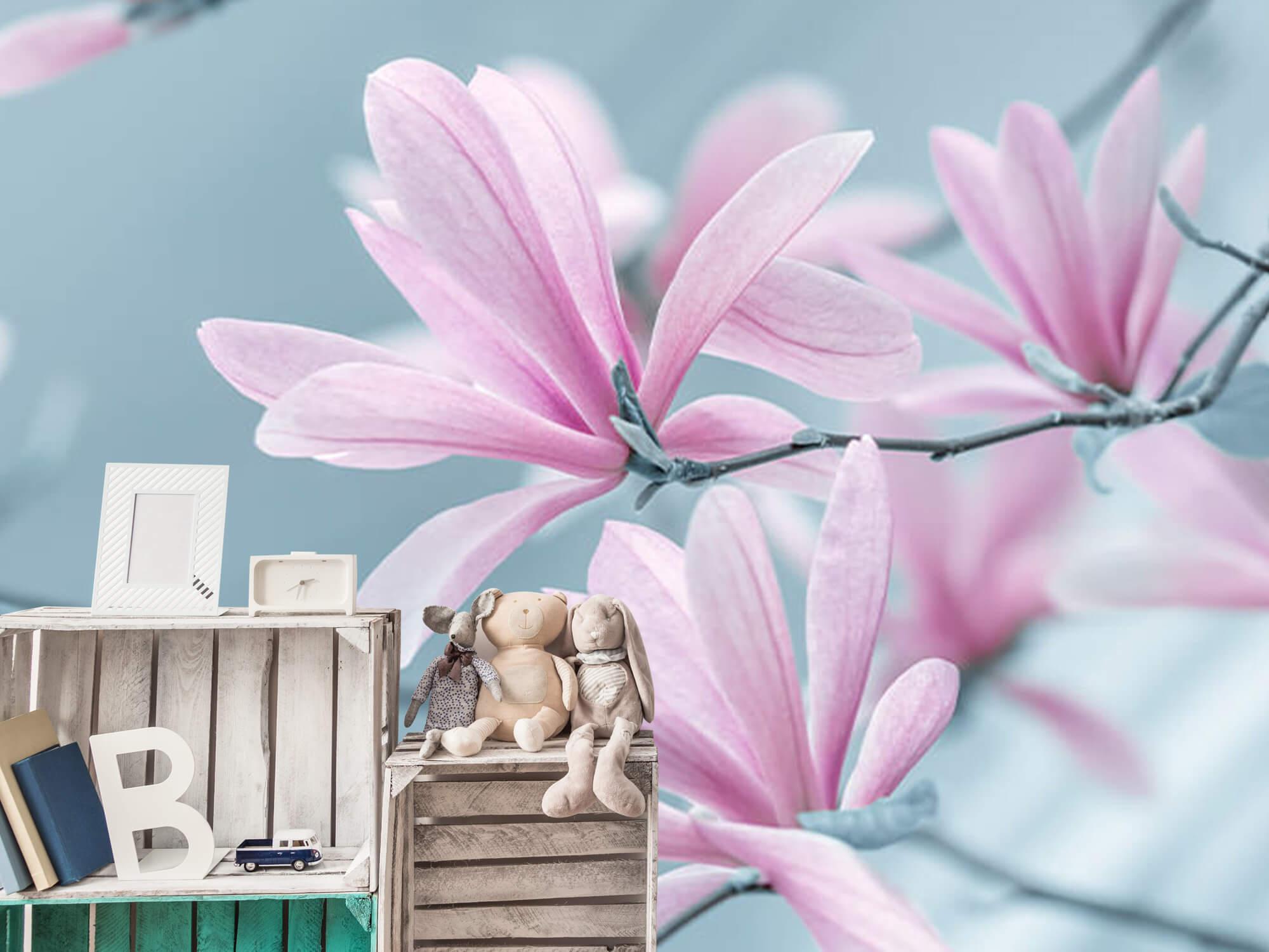 Magnolia bloemen 12