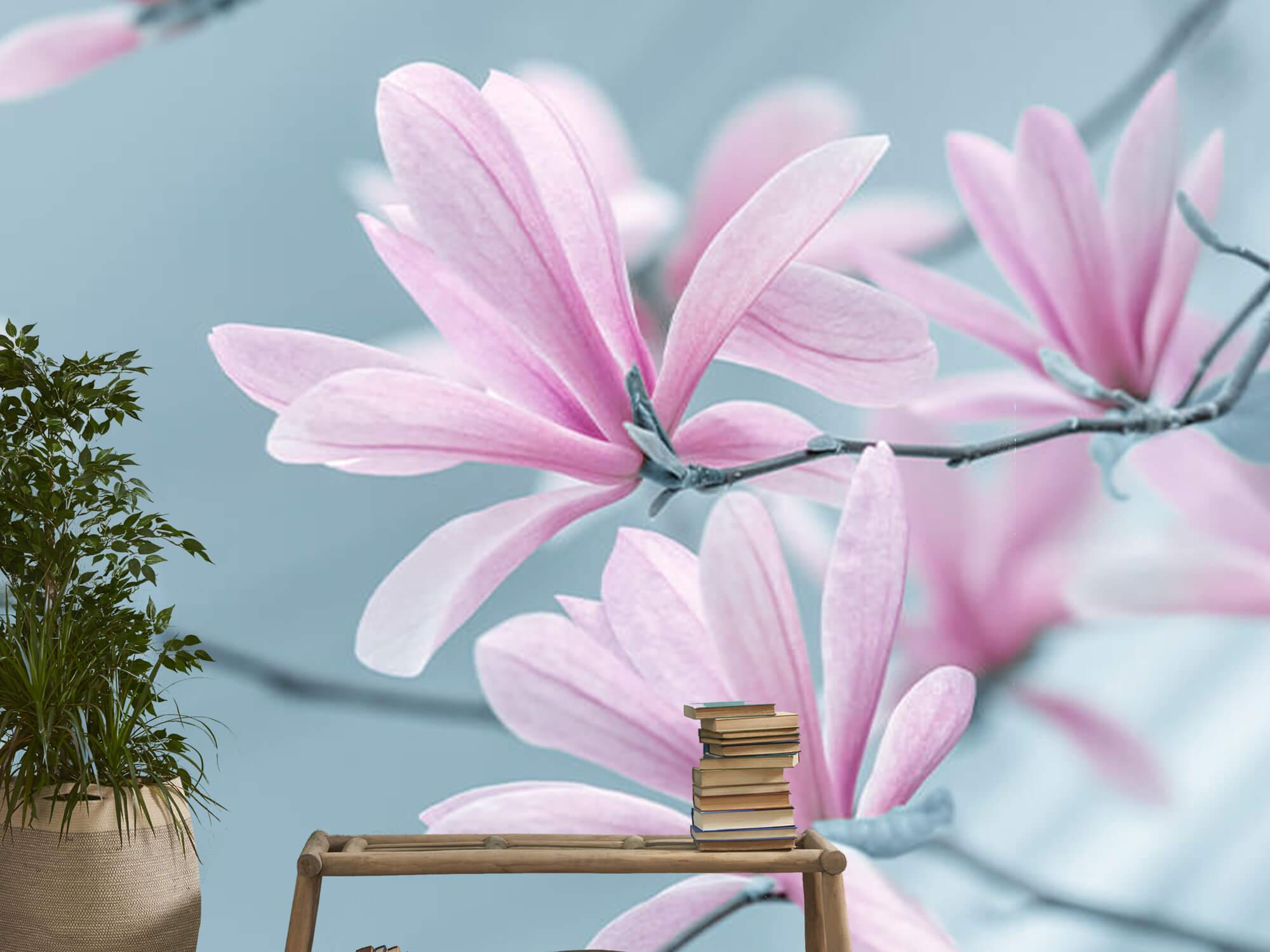 Magnolia bloemen 13