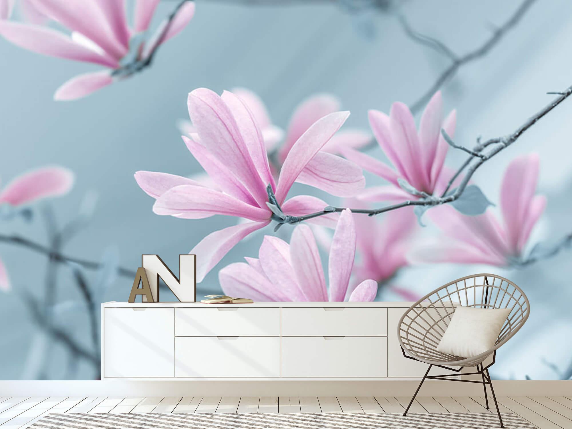Magnolia bloemen 16