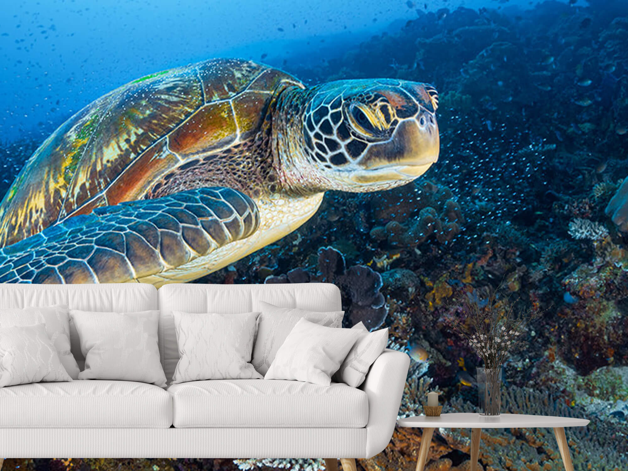 Green sea turtle from Raja Ampat 4