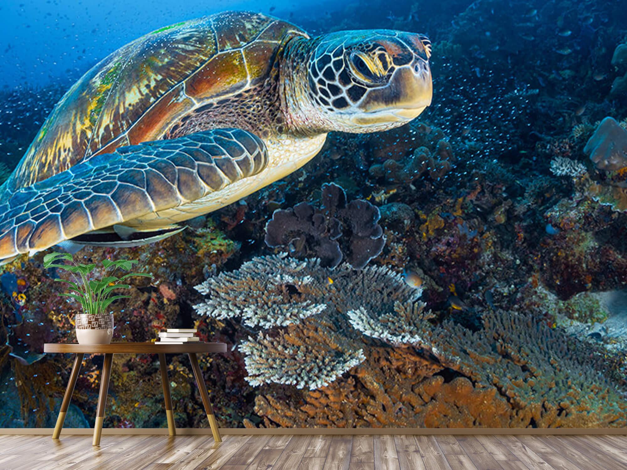 Green sea turtle from Raja Ampat 6