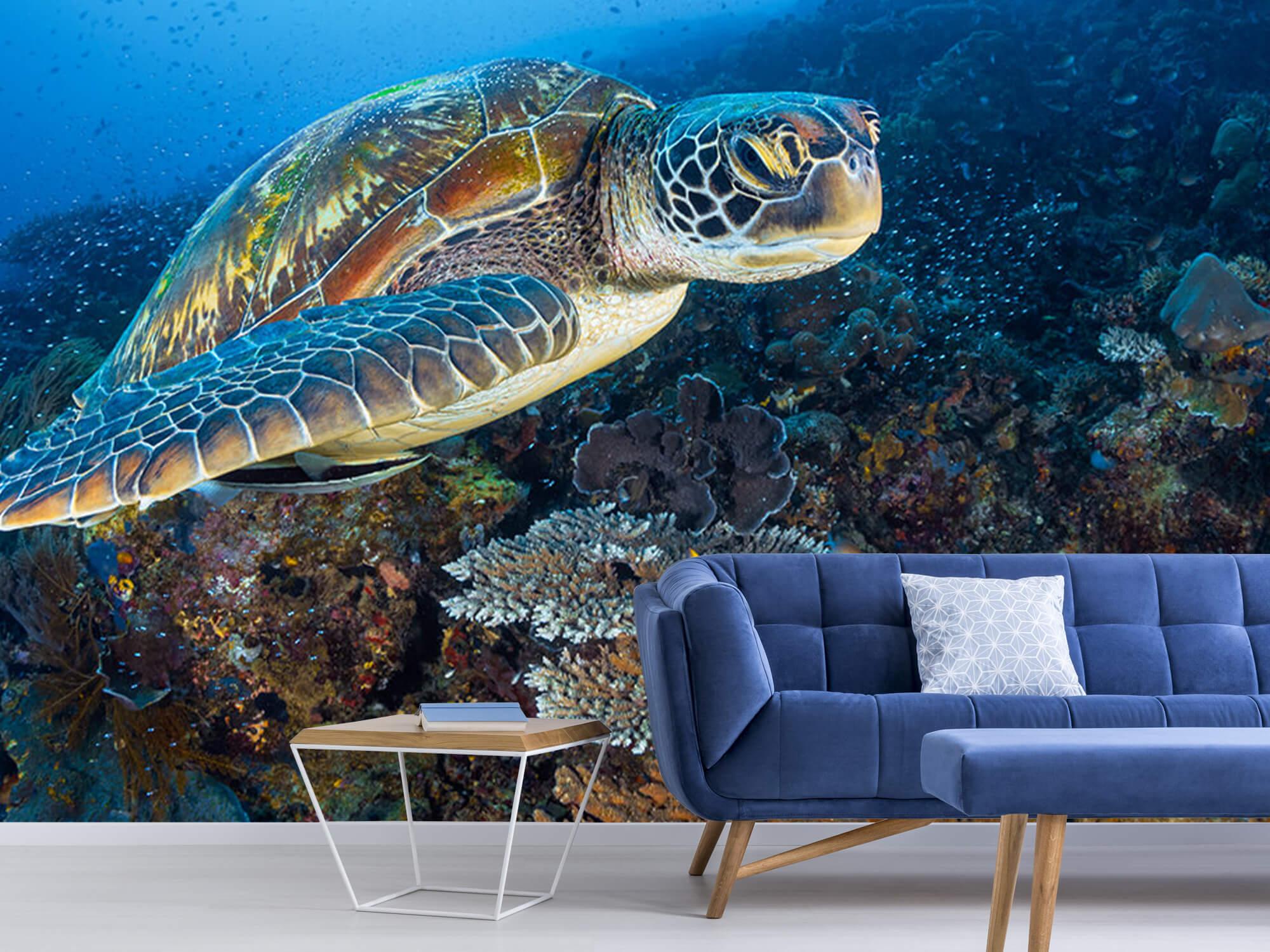 Green sea turtle from Raja Ampat 7