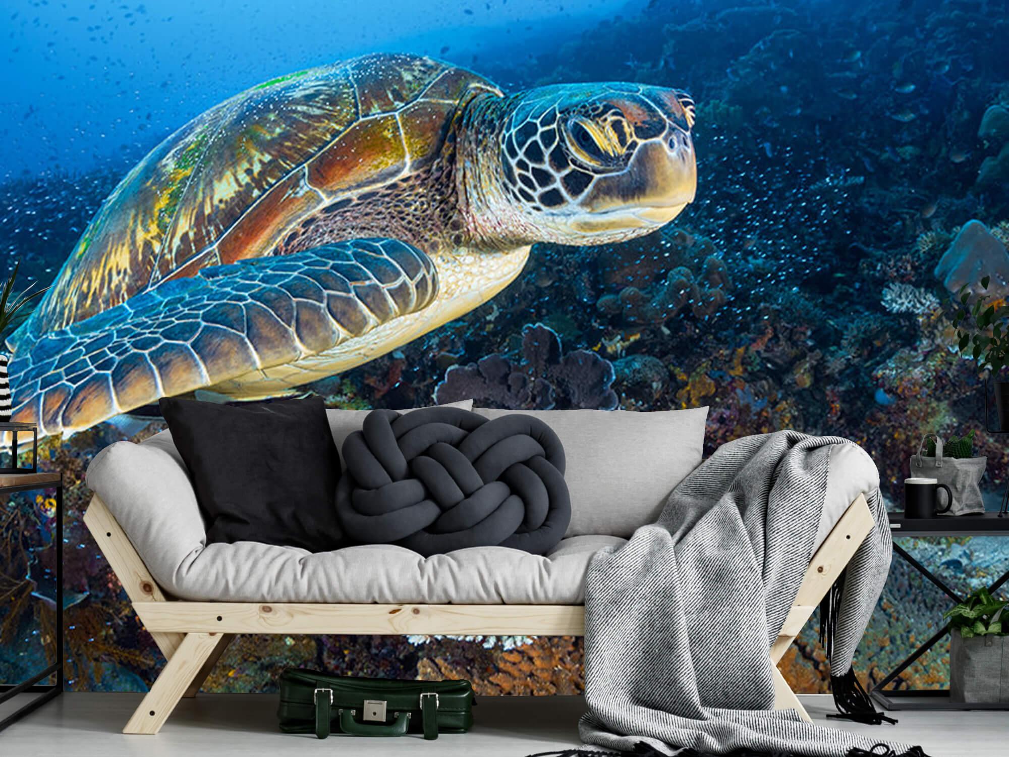 Green sea turtle from Raja Ampat 12