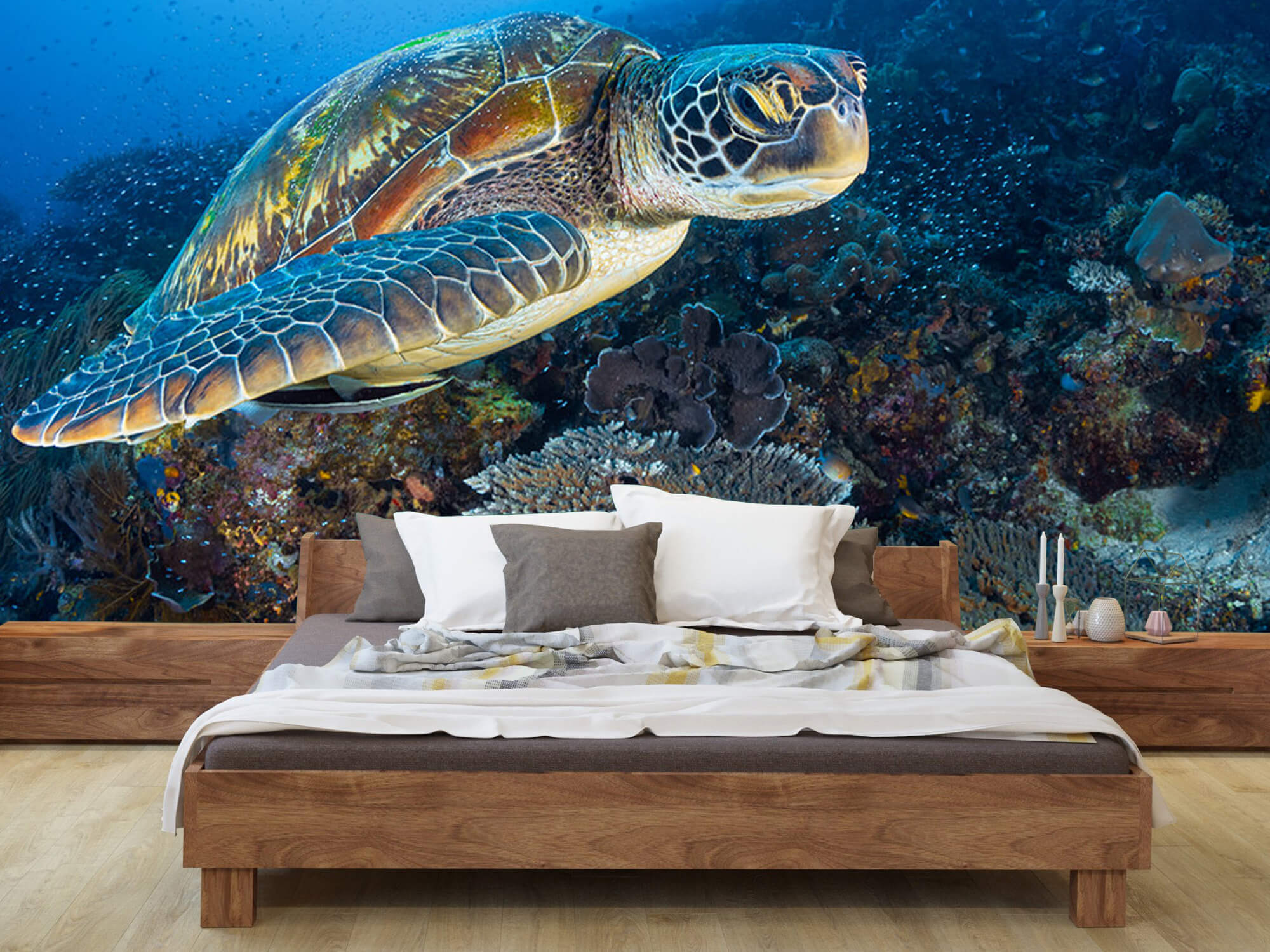 Green sea turtle from Raja Ampat 5