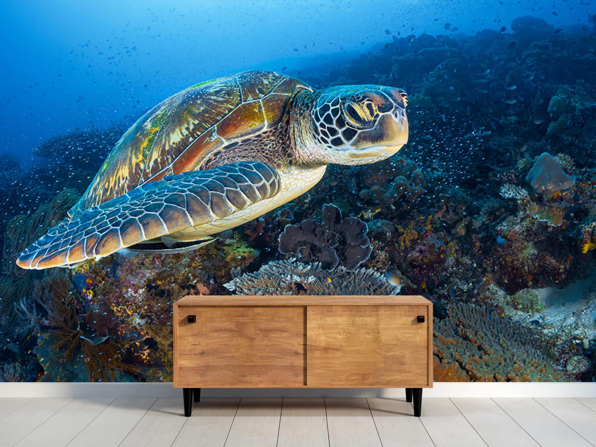Green sea turtle from Raja Ampat 3
