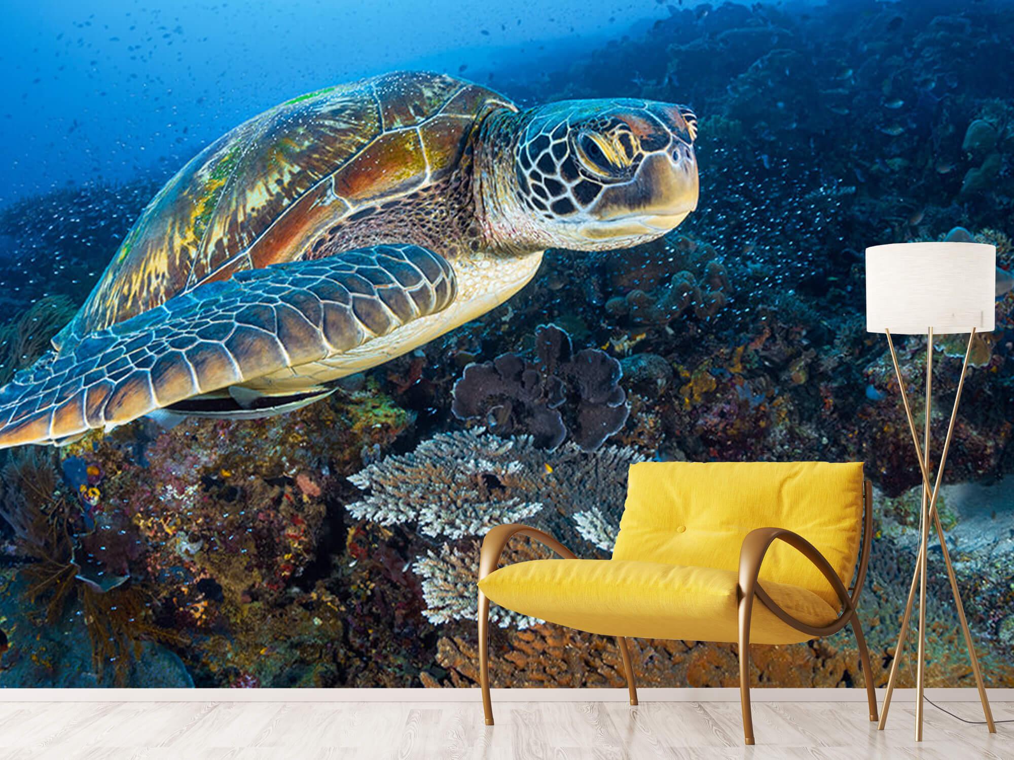 Green sea turtle from Raja Ampat 9