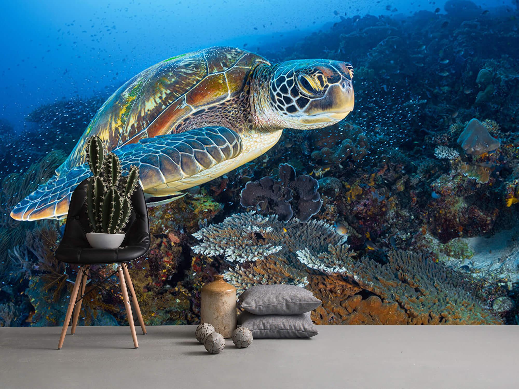 Green sea turtle from Raja Ampat 13