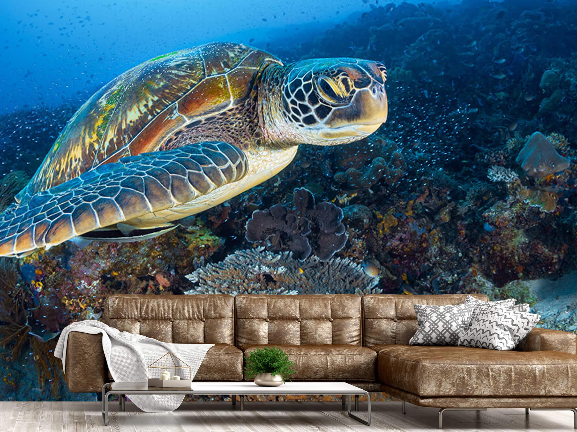Green sea turtle from Raja Ampat 10