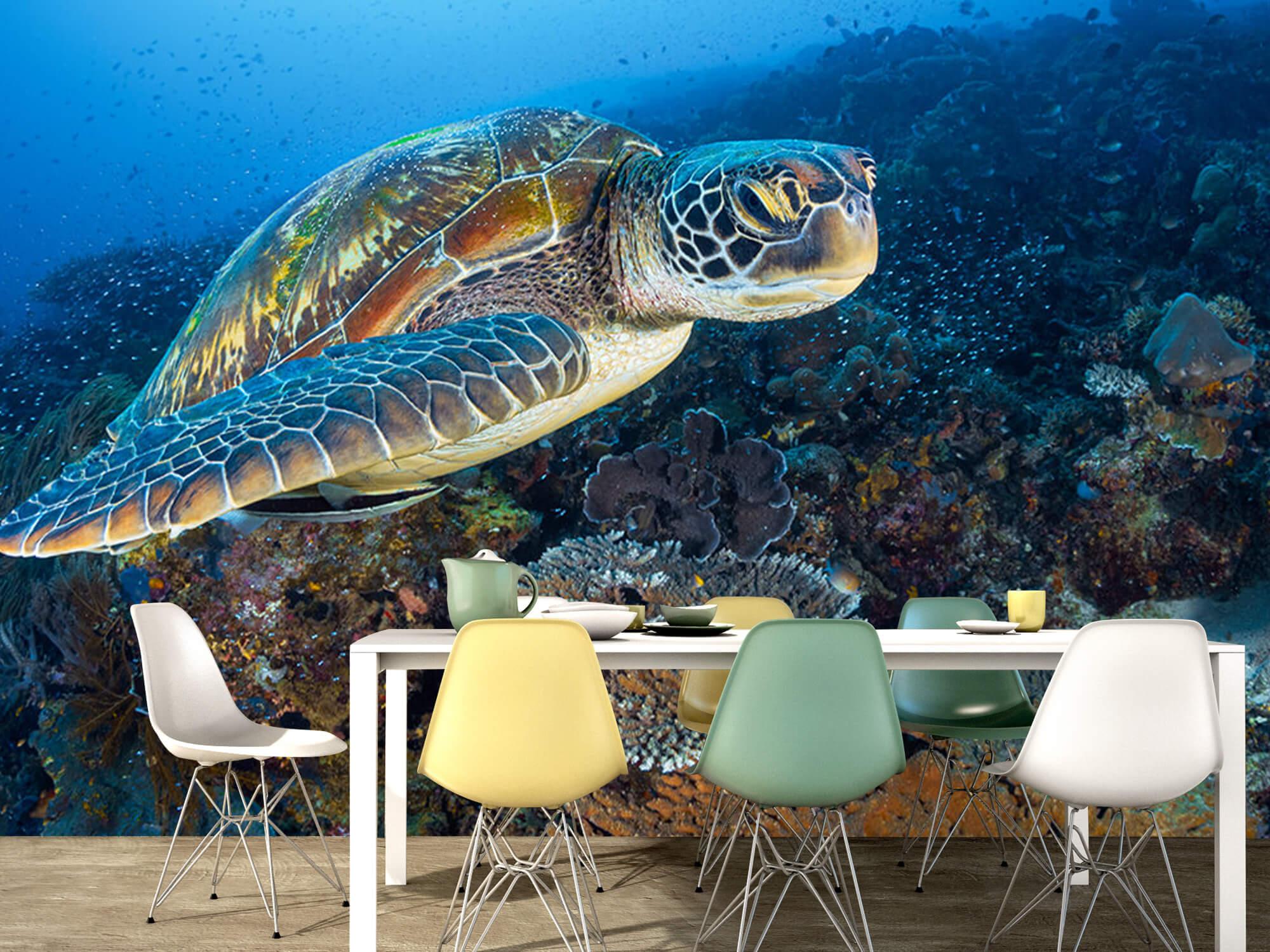 Green sea turtle from Raja Ampat 16