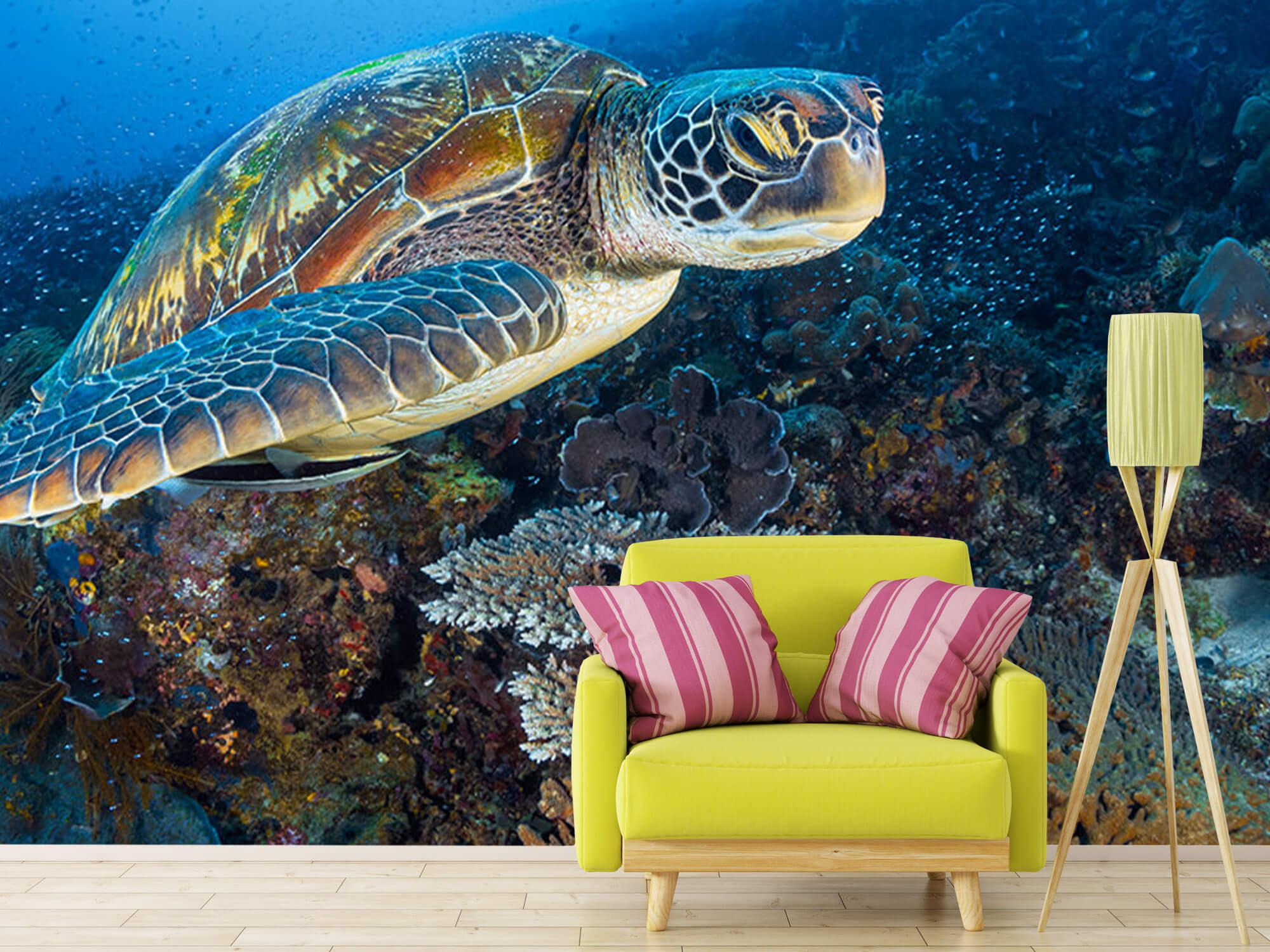Green sea turtle from Raja Ampat 2