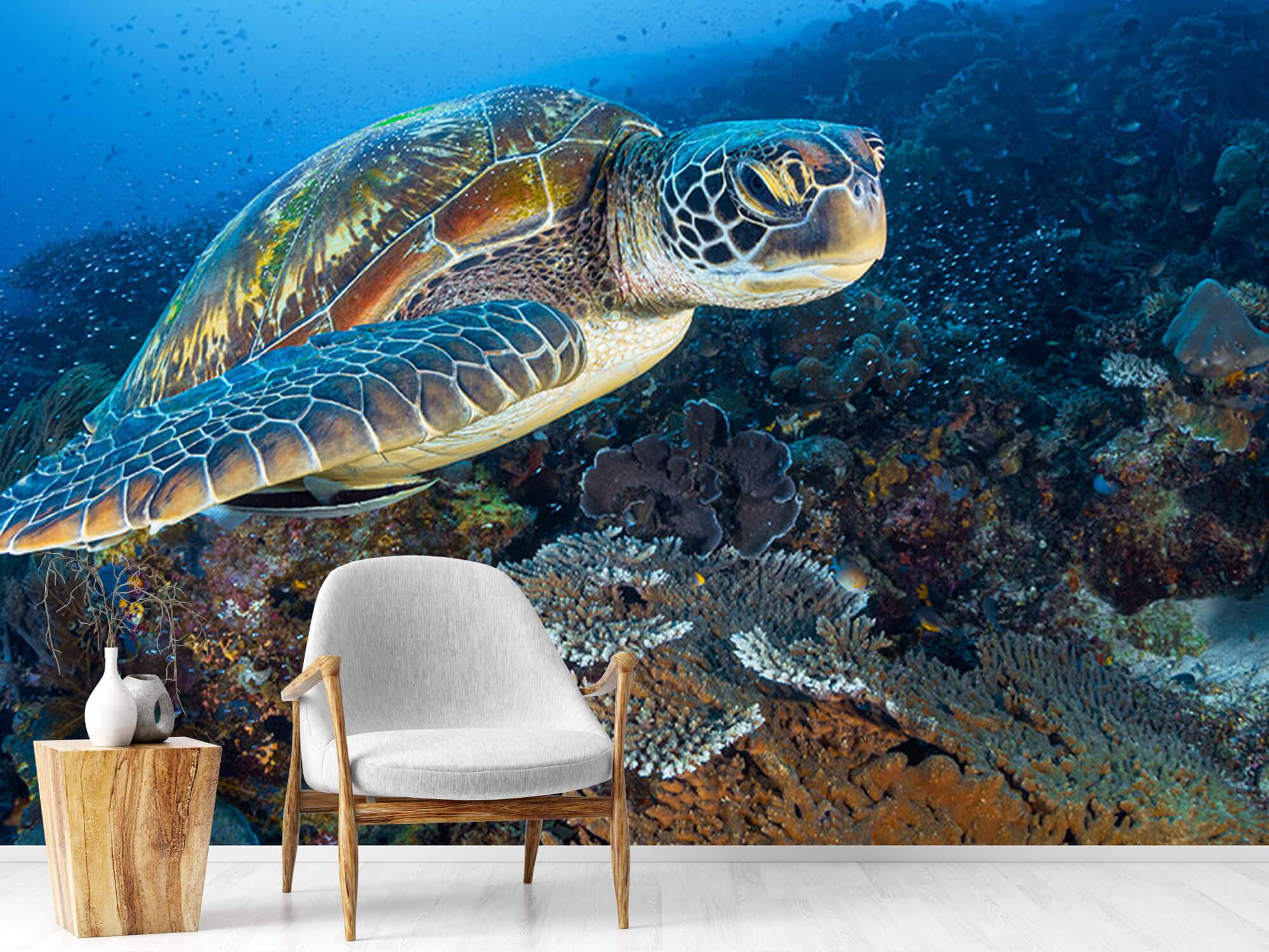 Green sea turtle from Raja Ampat 14