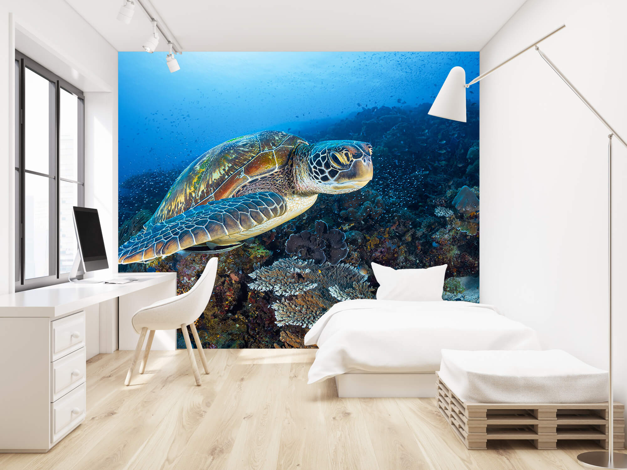 Green sea turtle from Raja Ampat 1