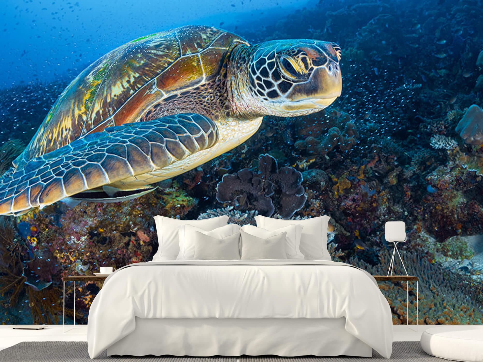 Green sea turtle from Raja Ampat 11