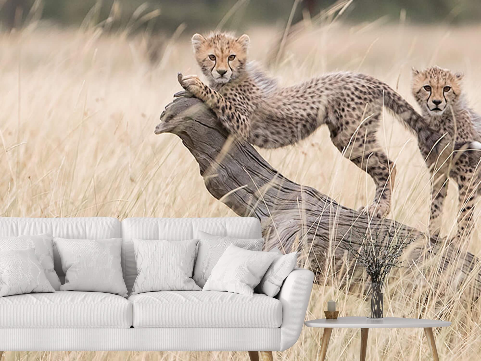 Curious Kitties 3