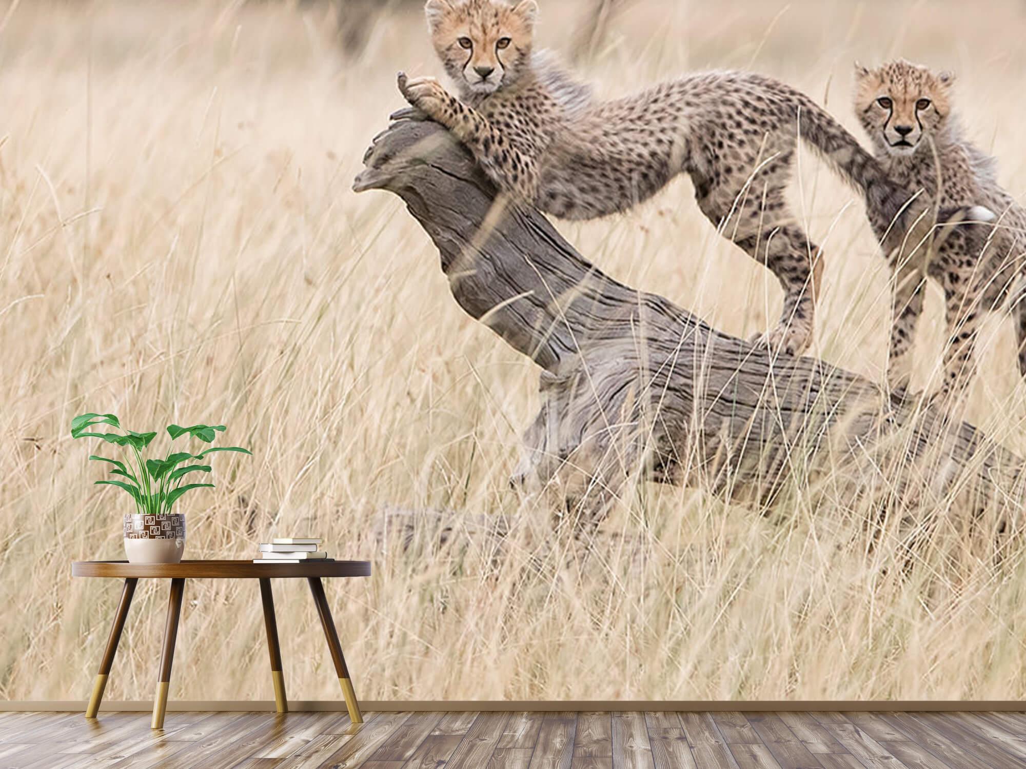 Curious Kitties 4
