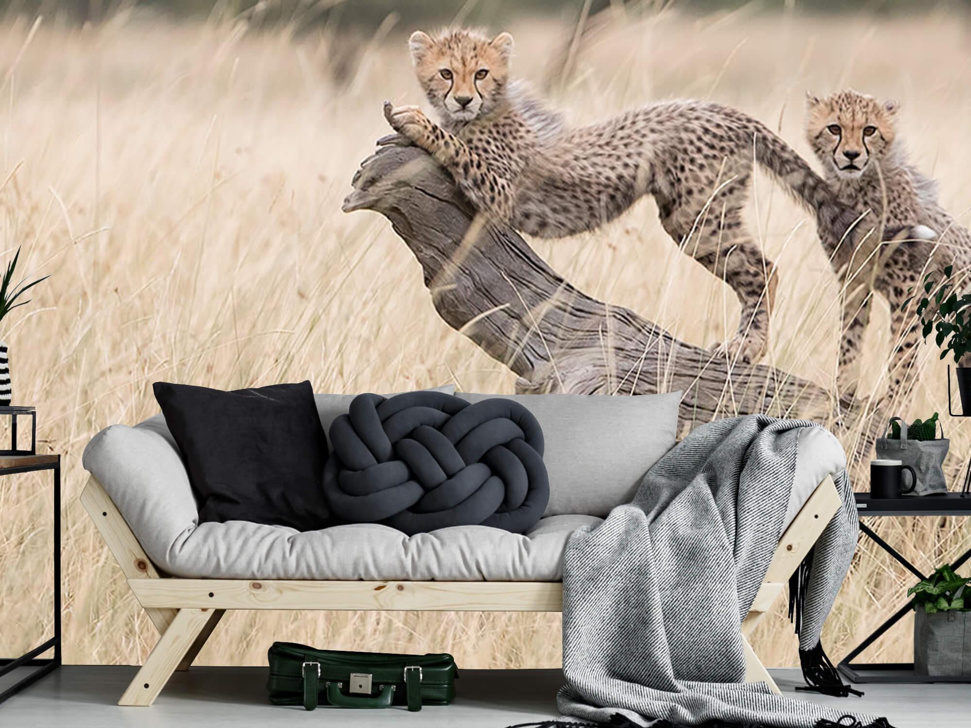 Curious Kitties 7