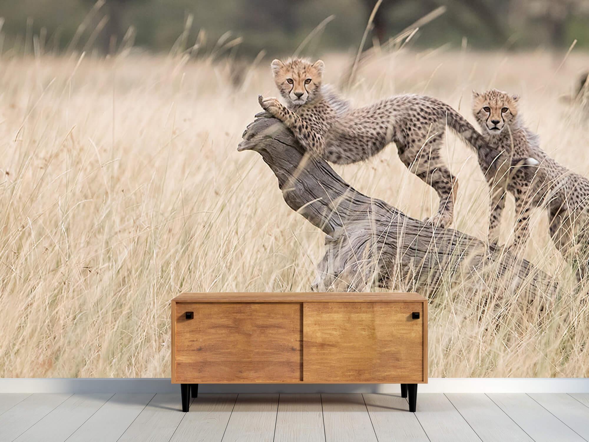 Curious Kitties 8