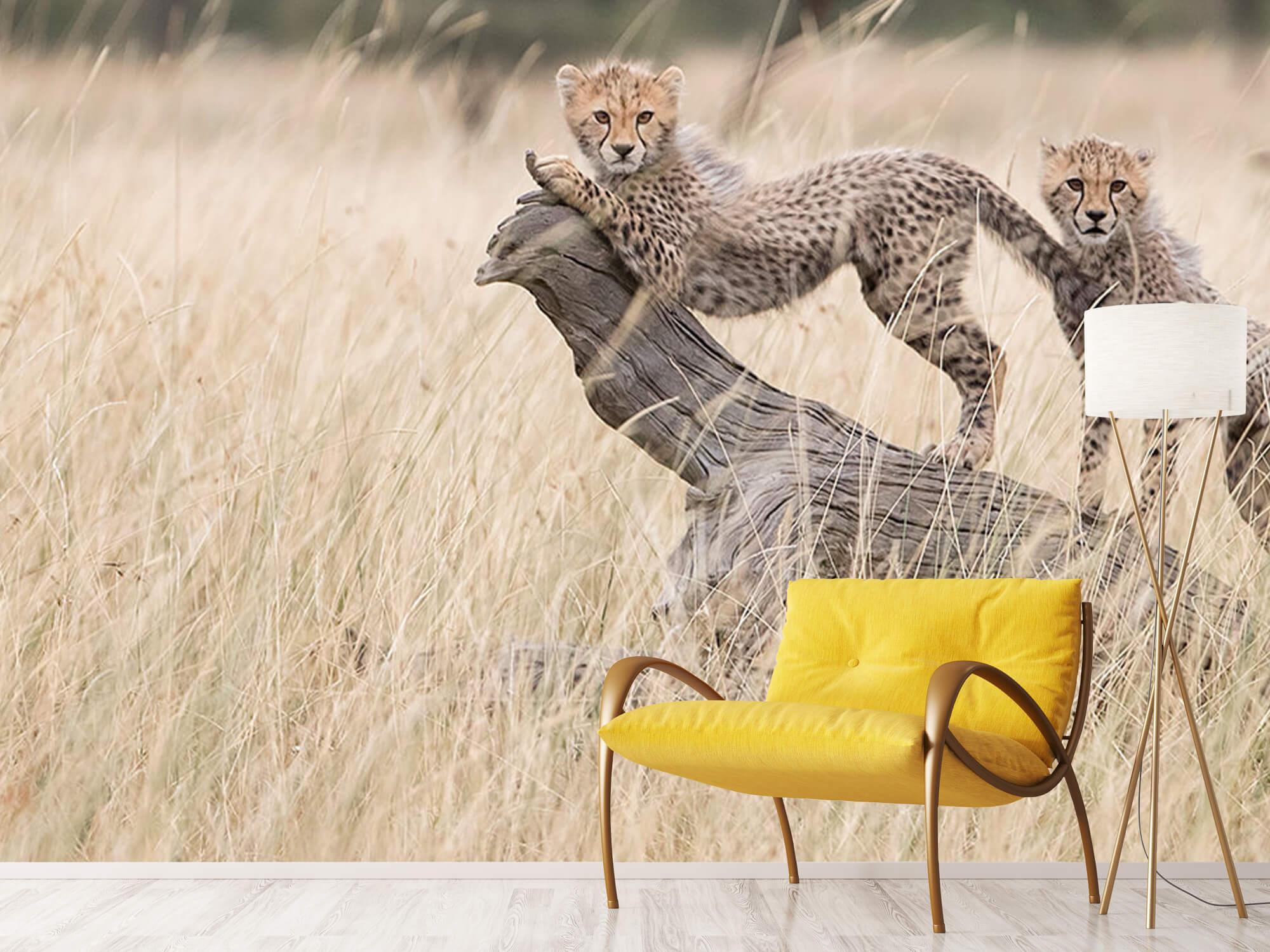 Curious Kitties 9