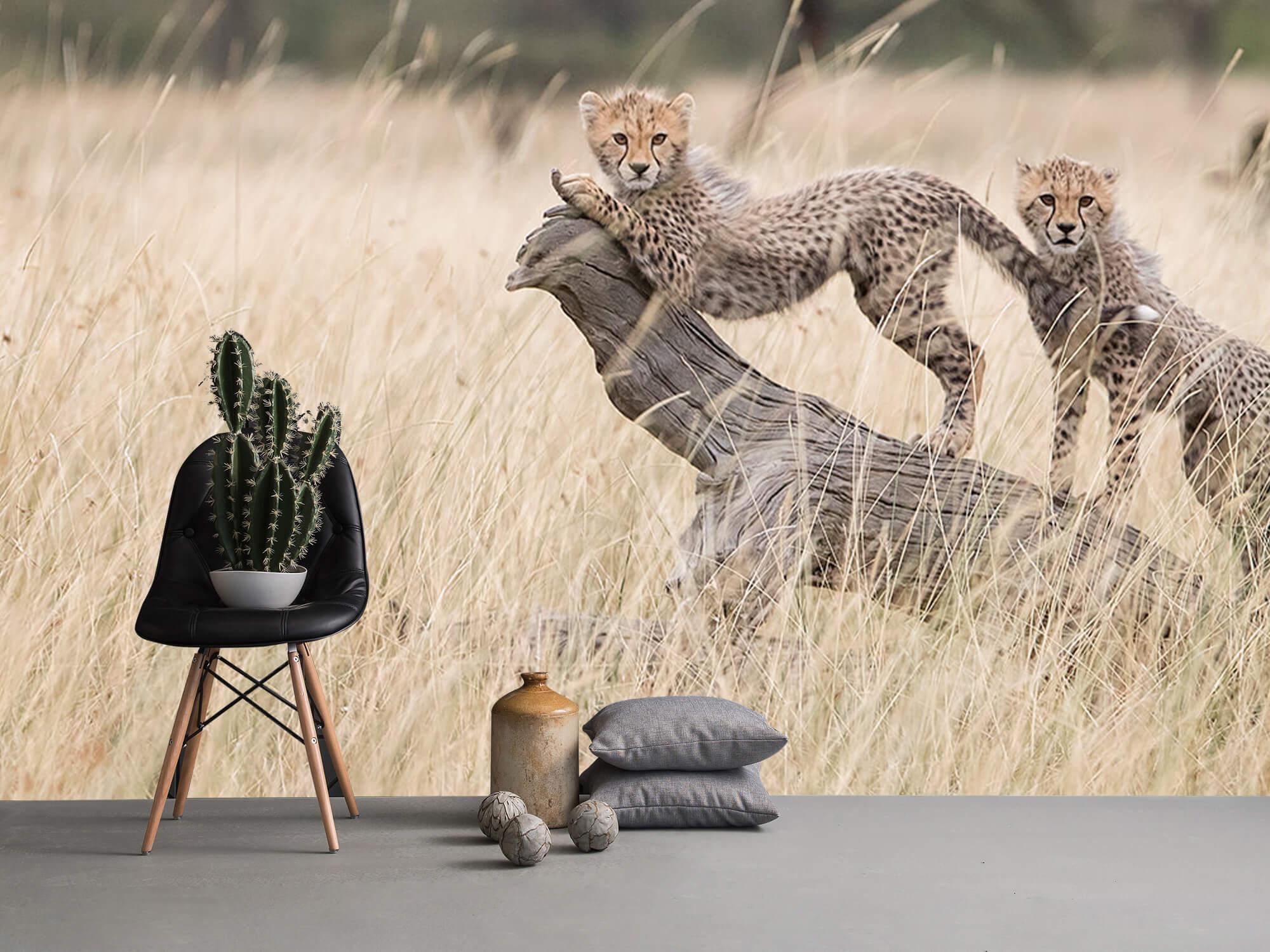 Curious Kitties 11